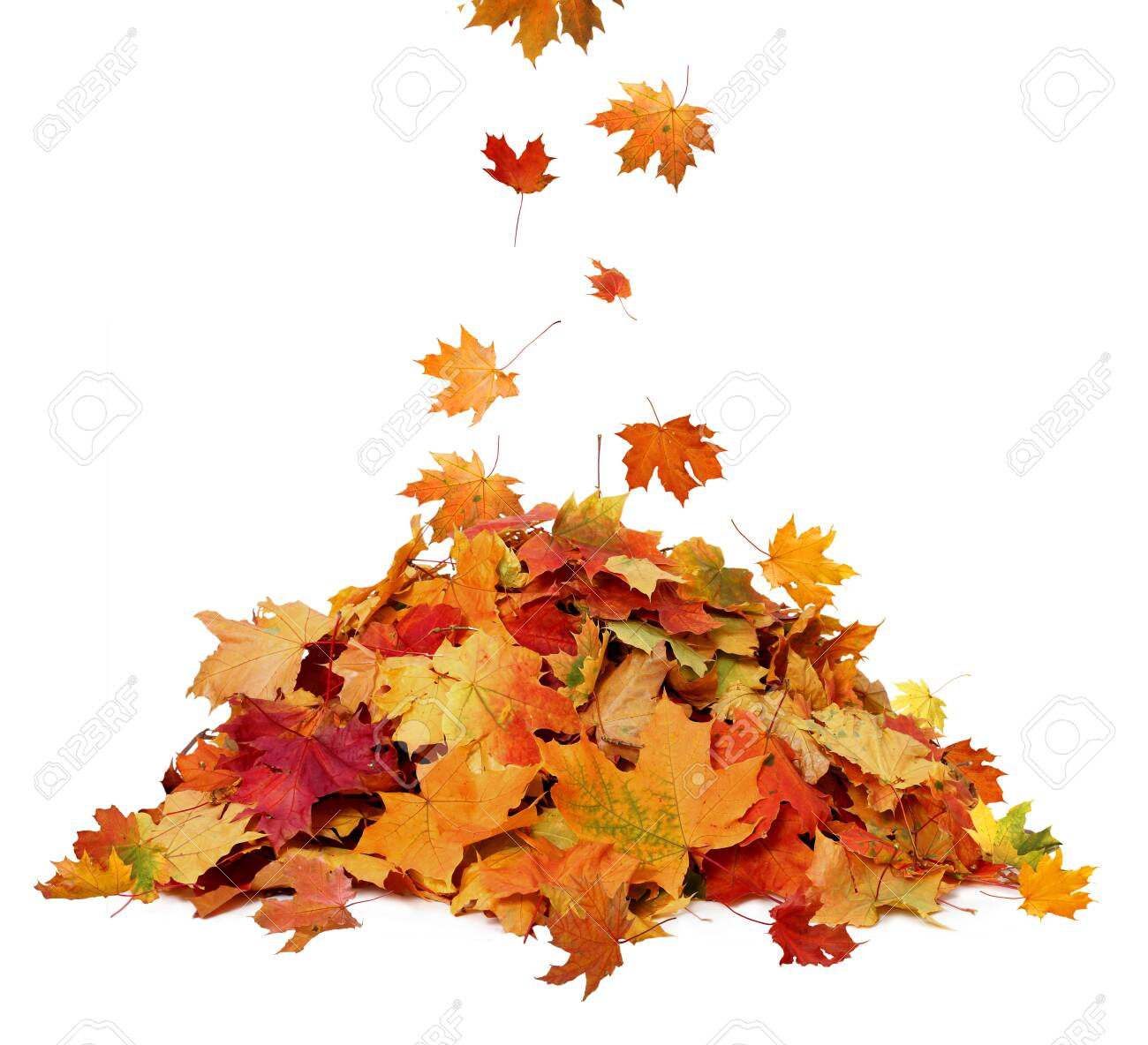 Pile of autumn colored leaves isolated on white background.A heap of different maple dry leaf .Red and colorful foliage colors in the fall season - 130015201