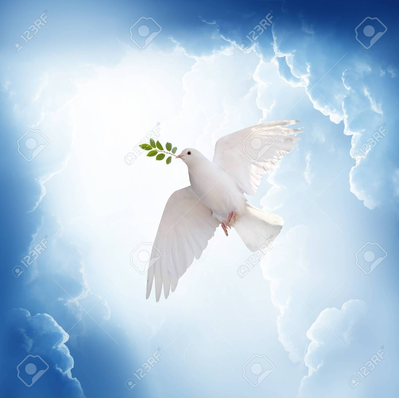 A free white dove holding green leaf branch flying in the sky.International Day of Peace concept background - 130015341