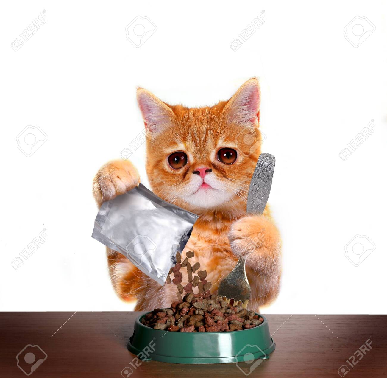 Funny kitten eating dry cat food from bowl. Exotic shorthair red cat isolated on white backgroundCute cat is sitting at the table and eats with plates - 141030518