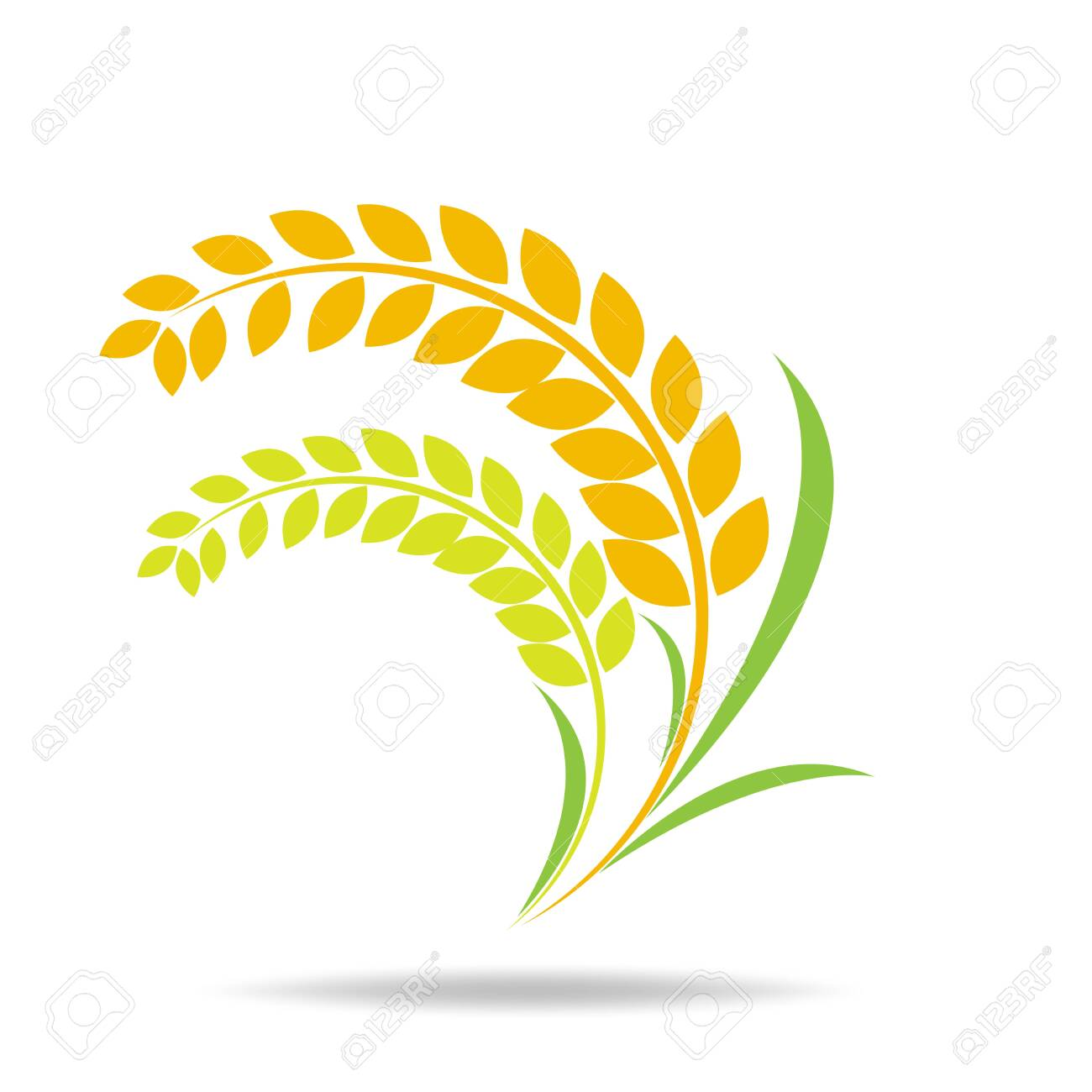 Rice organic Circle paddy grain products and healthy food design vector - 151412886