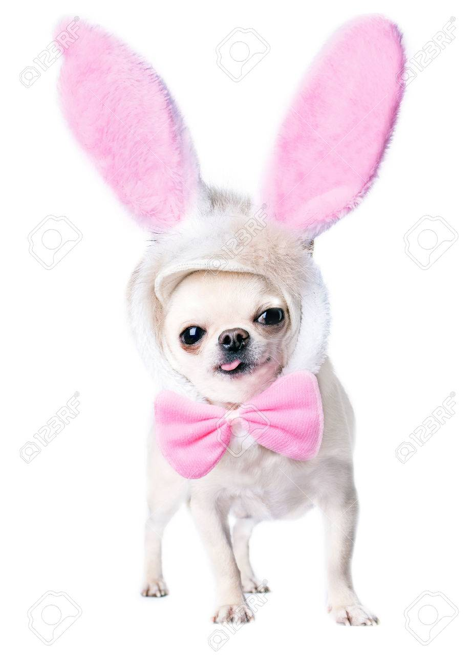 Top Bow Tie Bow Adorable Dog - 26812898-adorable-dog-with-funny-pink-hare-ears-and-bow-tie-isolated  Gallery_577751  .jpg