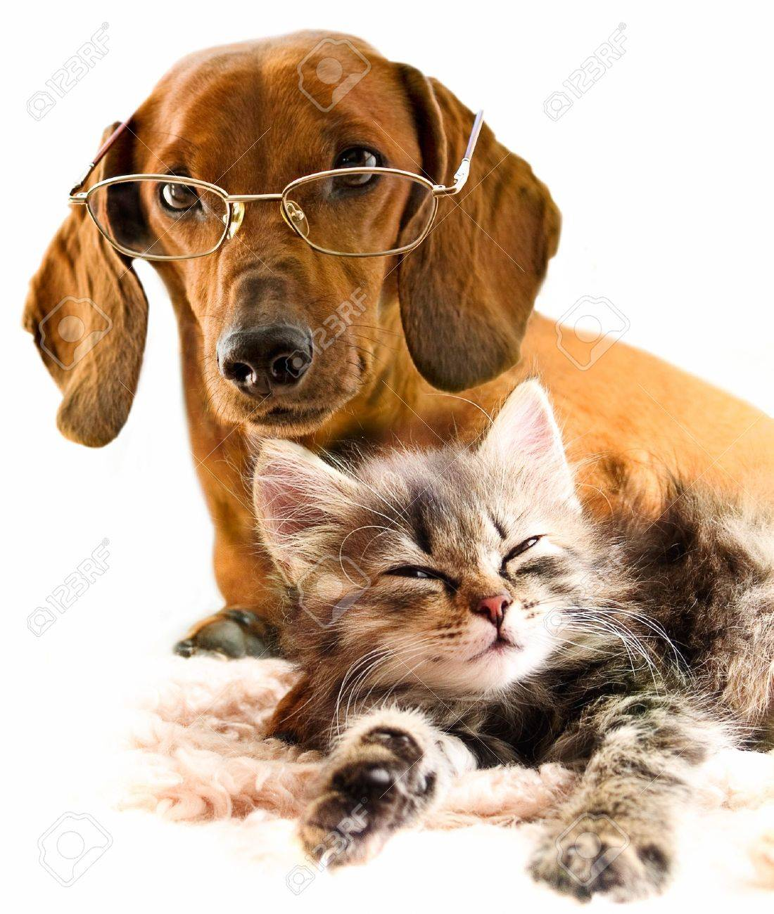 Cat and dog Stock Photo - 8691213