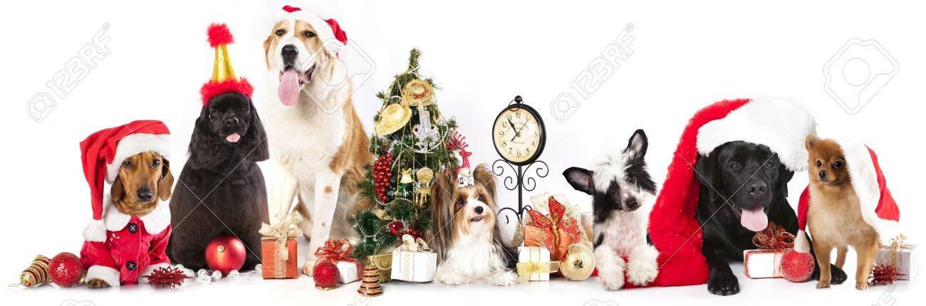 c83fd3cadebd1 dogs wearing a Santa hat Stock Photo - 21783505