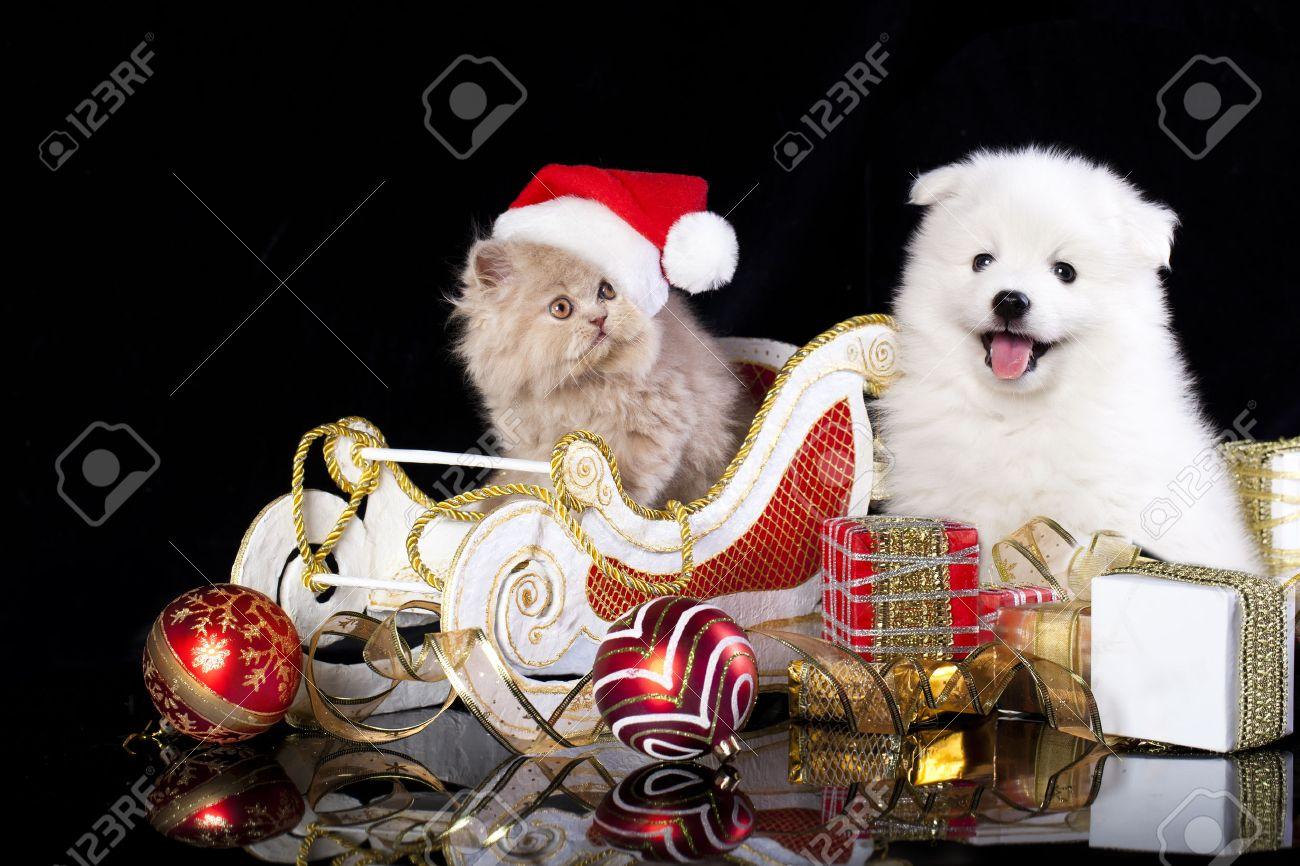 Père-Noël Surprise 2015 - Page 4 23182688-Blanc-chien-spitz-et-kiten-persan-portant-un-chapeau-de-p-re-No-l-chat-et-chien-Banque-d'images