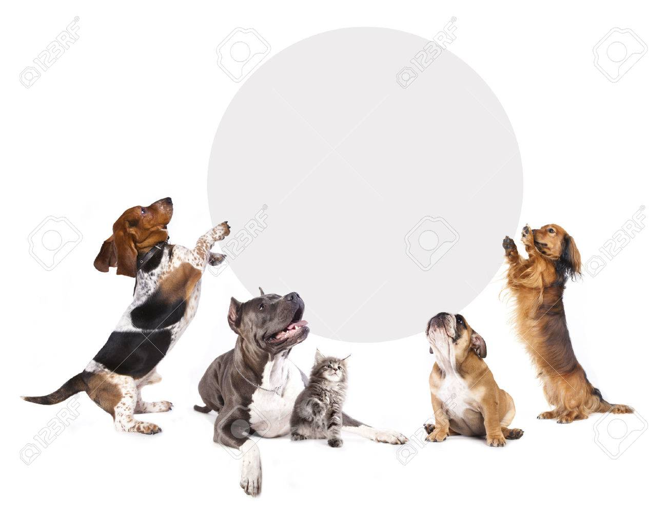 Cats And Dogs Holding A Cork Banner Stock Photo Picture And Royalty Free Image Image 38939141