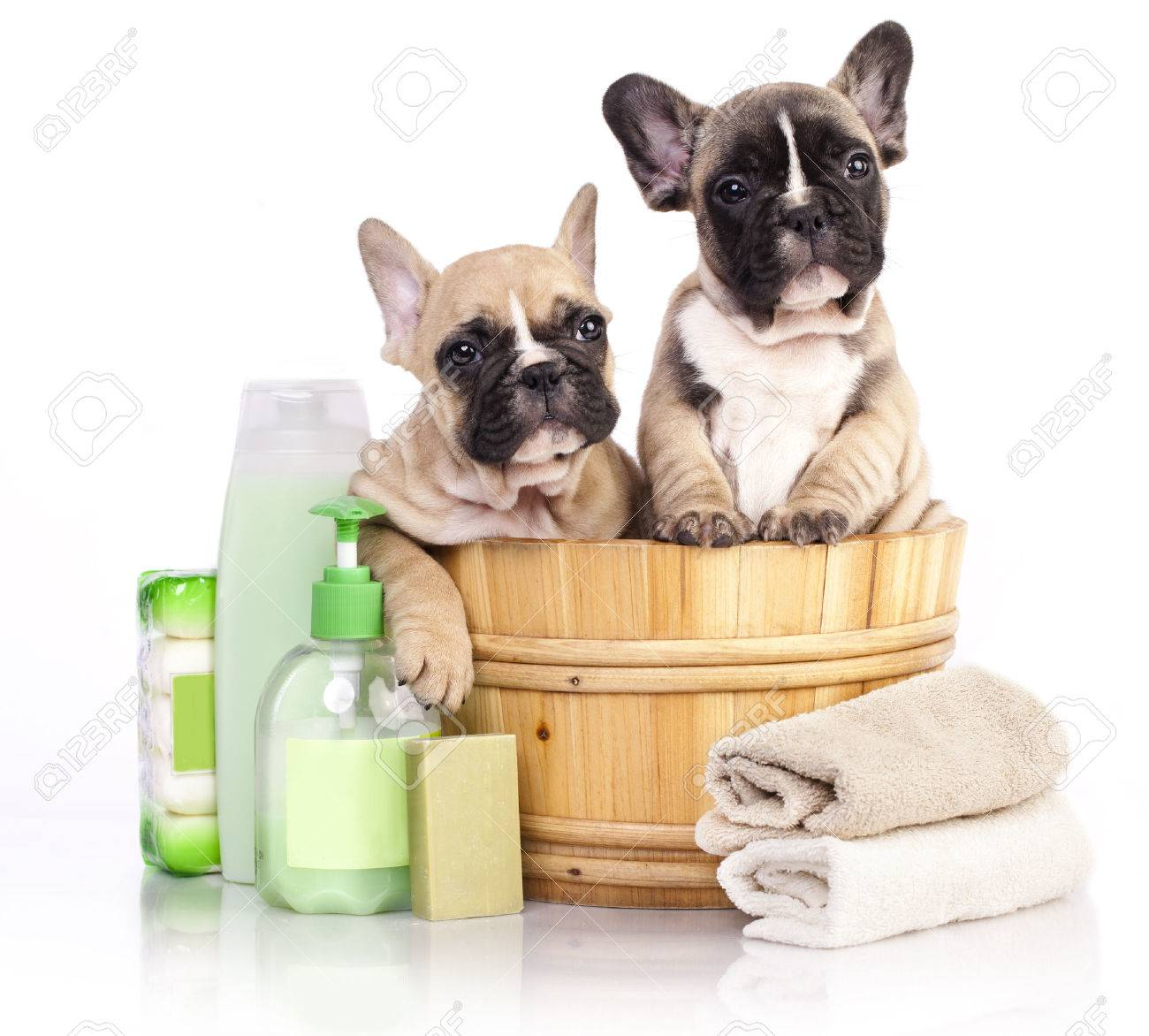 puppy bath time - French bulldog puppy in wooden wash basin with soap suds - 43958710