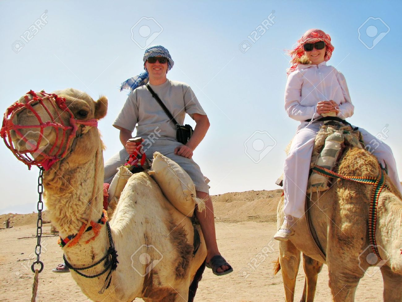 essay on desert animal camel The camel essay in english, easy camel school essay the camel essay in english subject: write an english essay on the camel in your words complexity: easy: grade.
