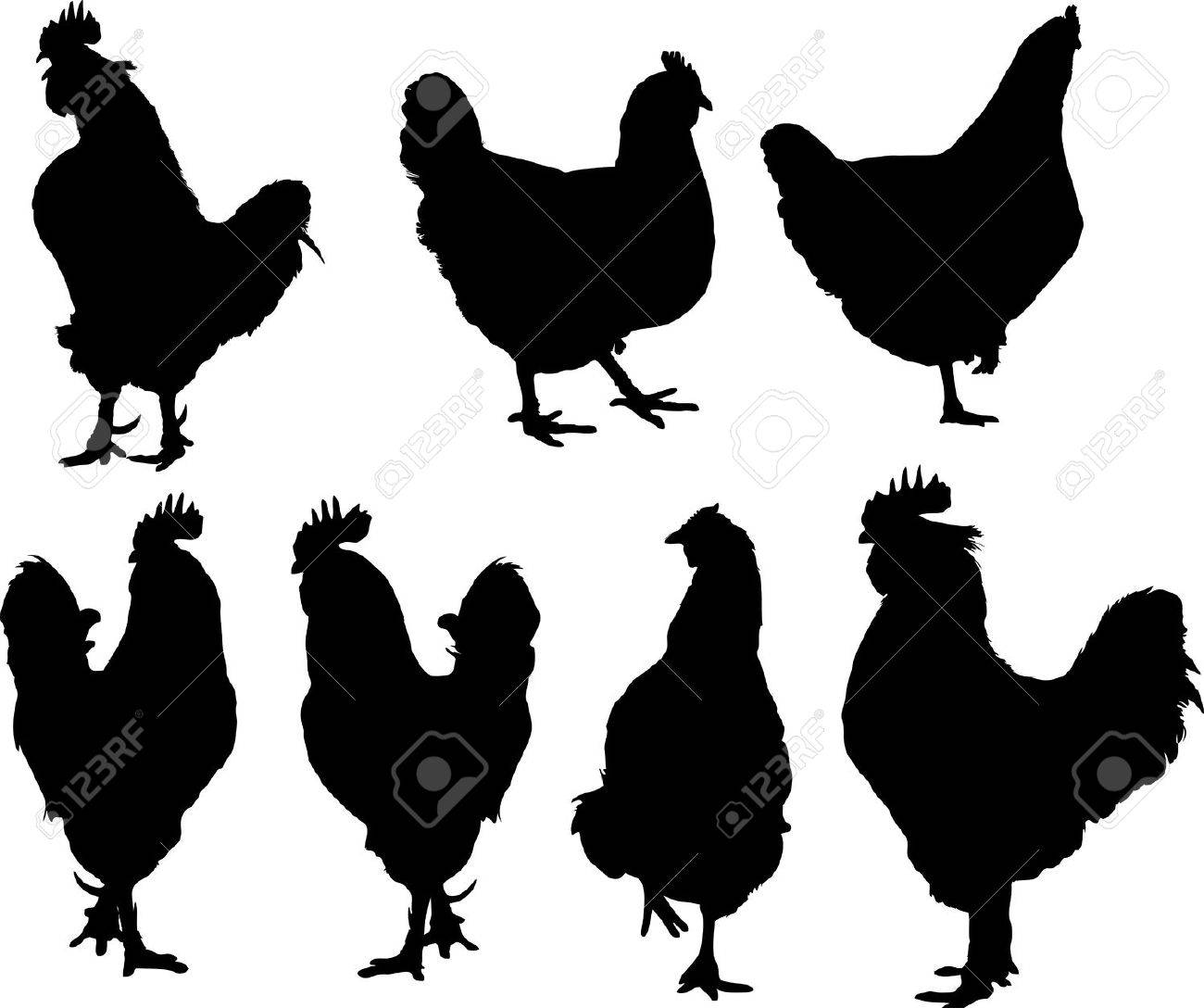 vector silhouette of group hens and roosters royalty free cliparts