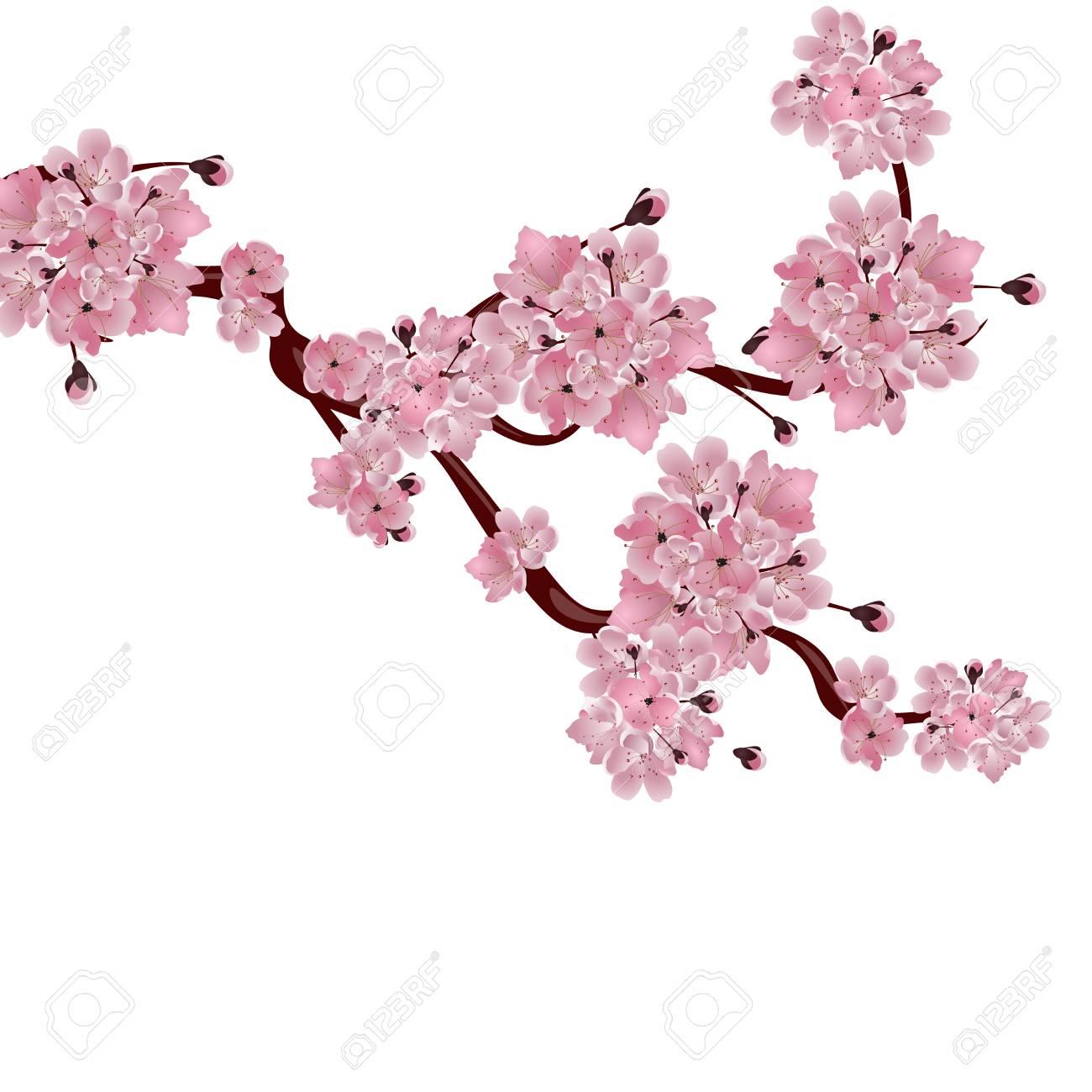 Exuberante Cerezo Japonés La Rama De La Flor De Cerezo Rosa