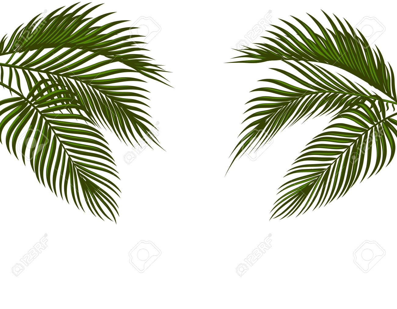 Different In Form Tropical Dark Green Palm Leaves On Both Sides Stock Photo Picture And Royalty Free Image Image 97507093 22 x separate elements in png with transparent background & jpg with white background. different in form tropical dark green palm leaves on both sides