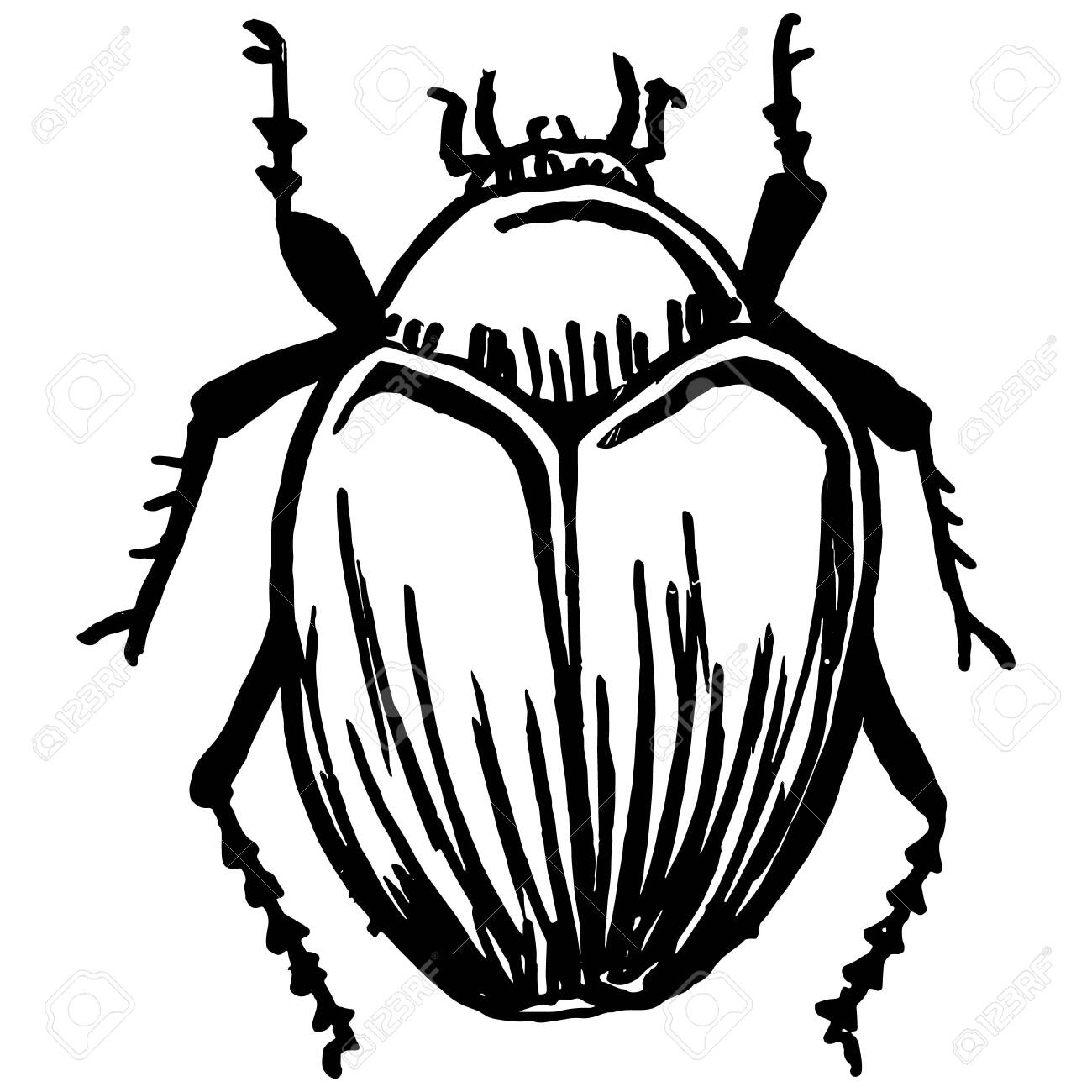 Insect And Pest Repellent - Bedbug Clipart (#2185024) - PinClipart