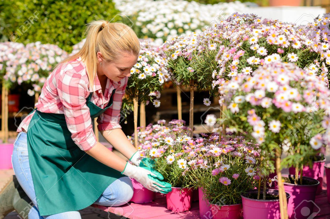 jardines trabajador mujer arrodillada con flores en macetas de color rosa de sol foto de archivo