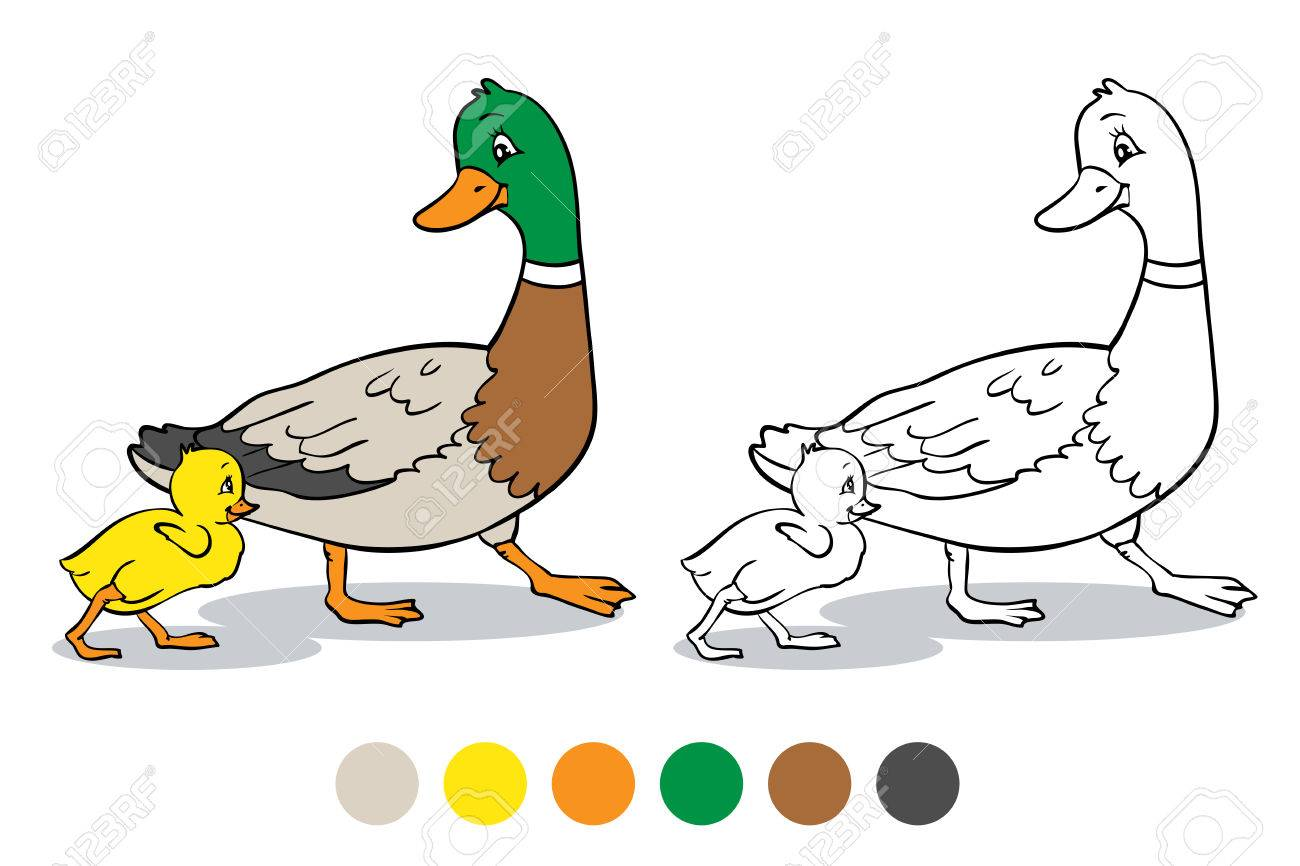 Coloring Book Or Page. Mother Duck And Ducklings. Mallard Duck ... for Duck And Duckling Clipart  53kxo