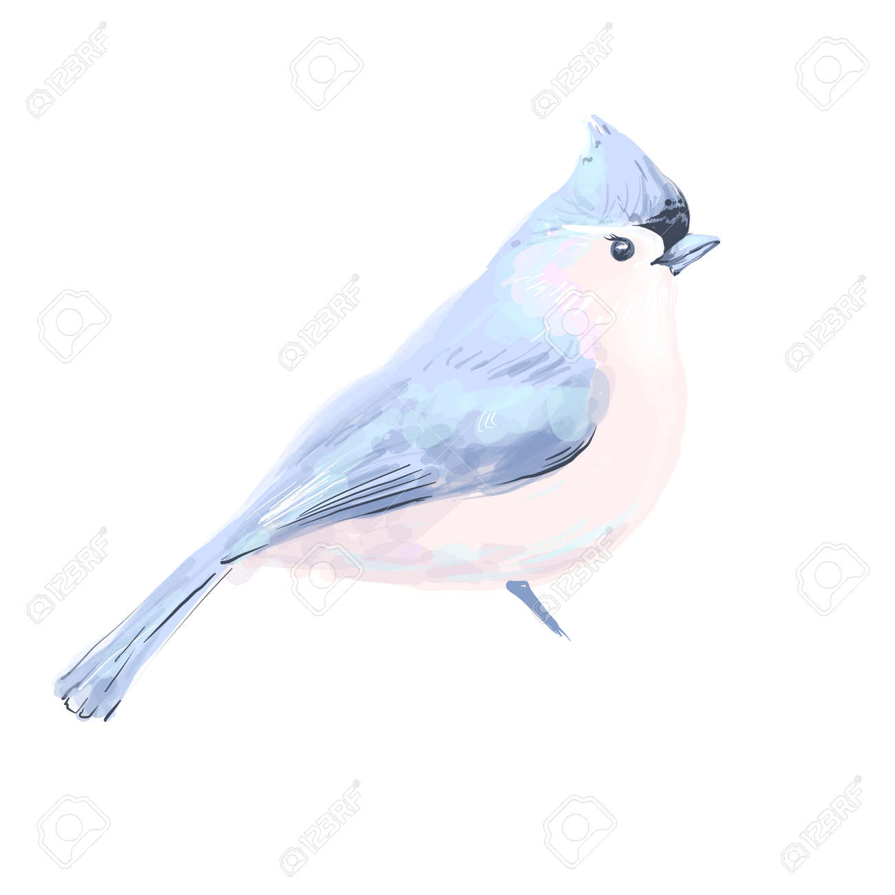 Bird vector watercolor isolated on white background. - 162986073