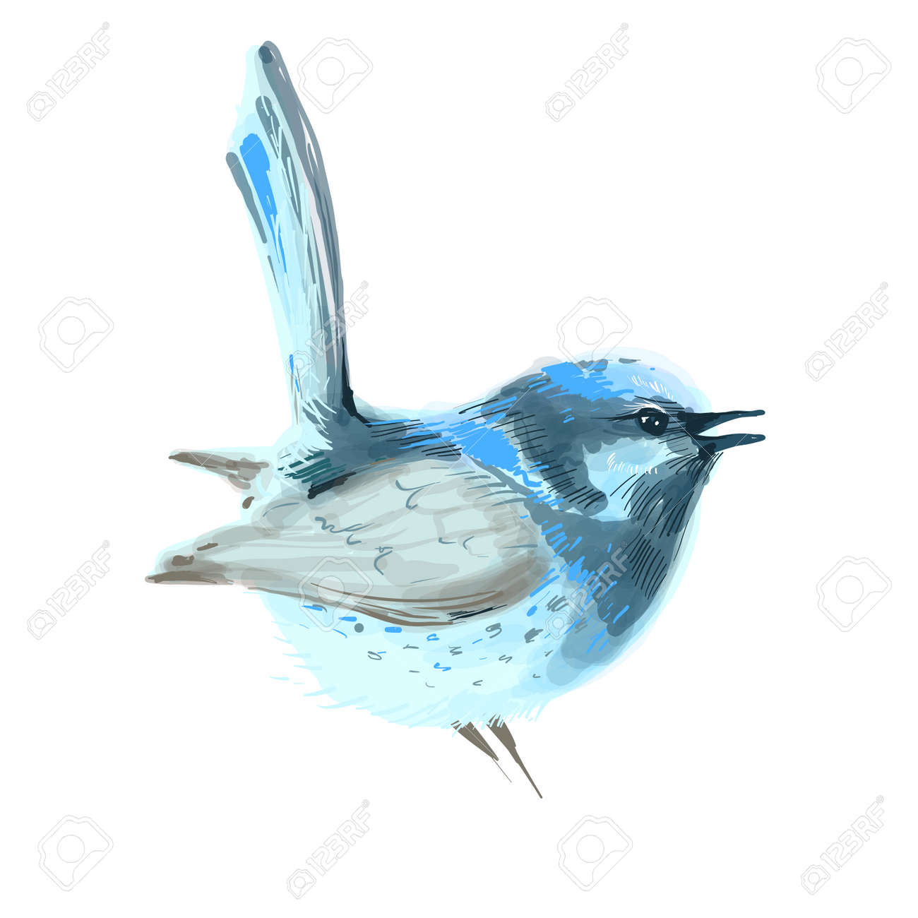 Bird vector watercolor isolated on white background. - 163002853