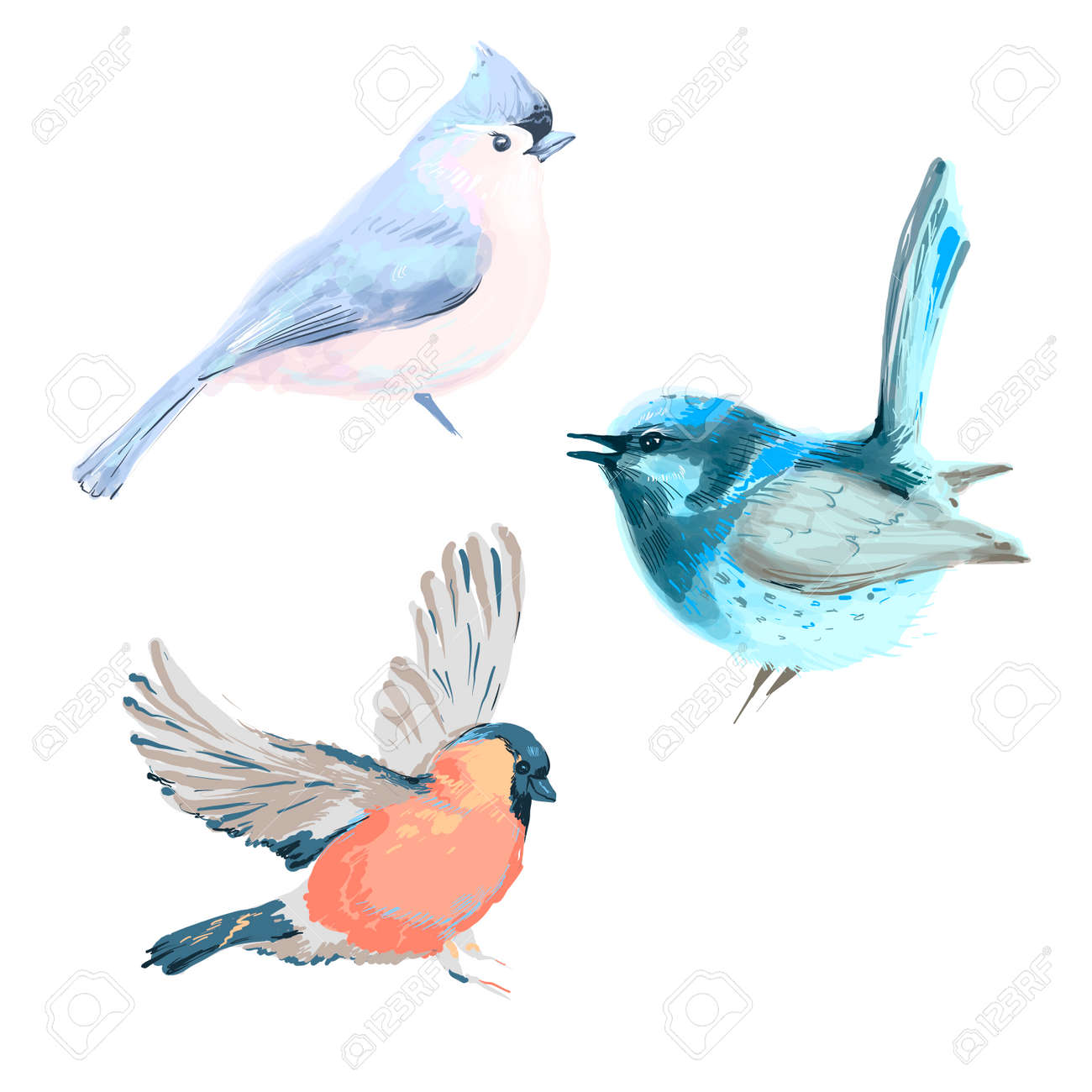 Vector illustration of three different birds isolated on white - 169291492