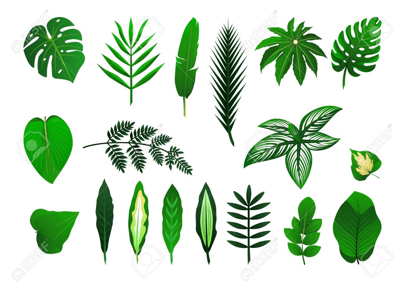 Icon set of different tropical plants leaves. Palm, monster, banana. Vector isolated illustration. As template for graphic design, pattern, wallpaper for web - 137652970