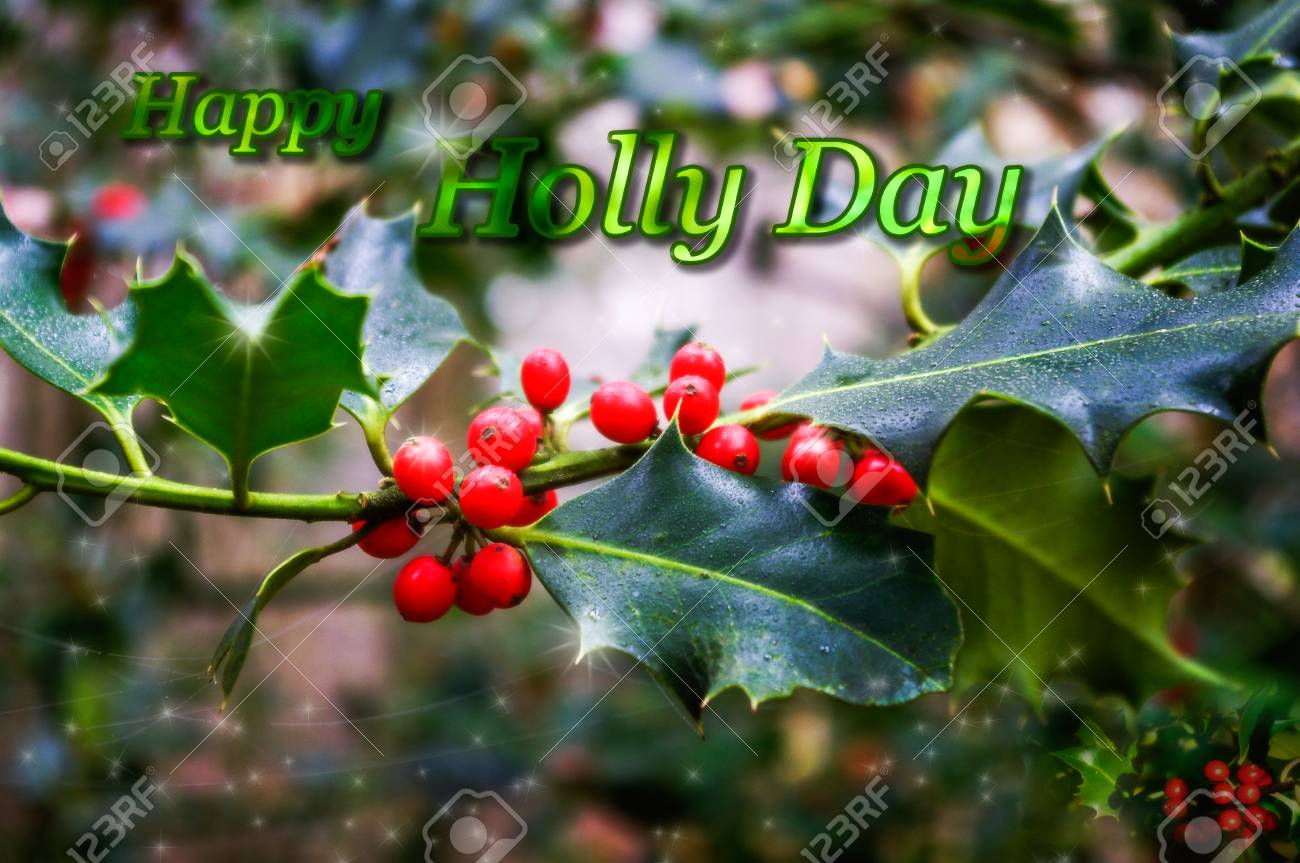 Christmas Greetings Card Design With Holly And Berries And Wording