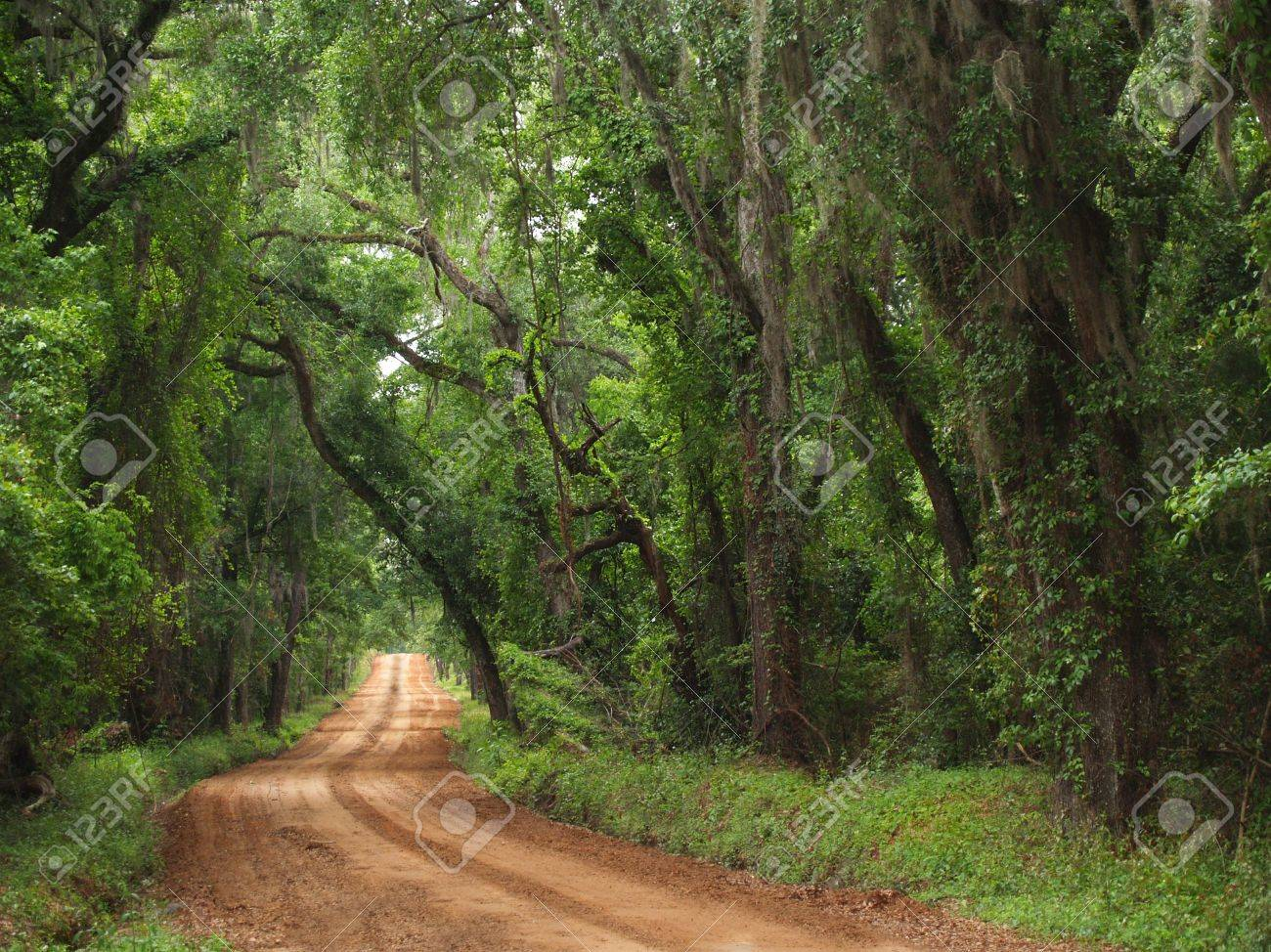 Red clay plantation country road lined with a canopy of trees and Spanish moss including live oaks in the south Georgia, north Florida area during late spring or early summer time. - 6882191