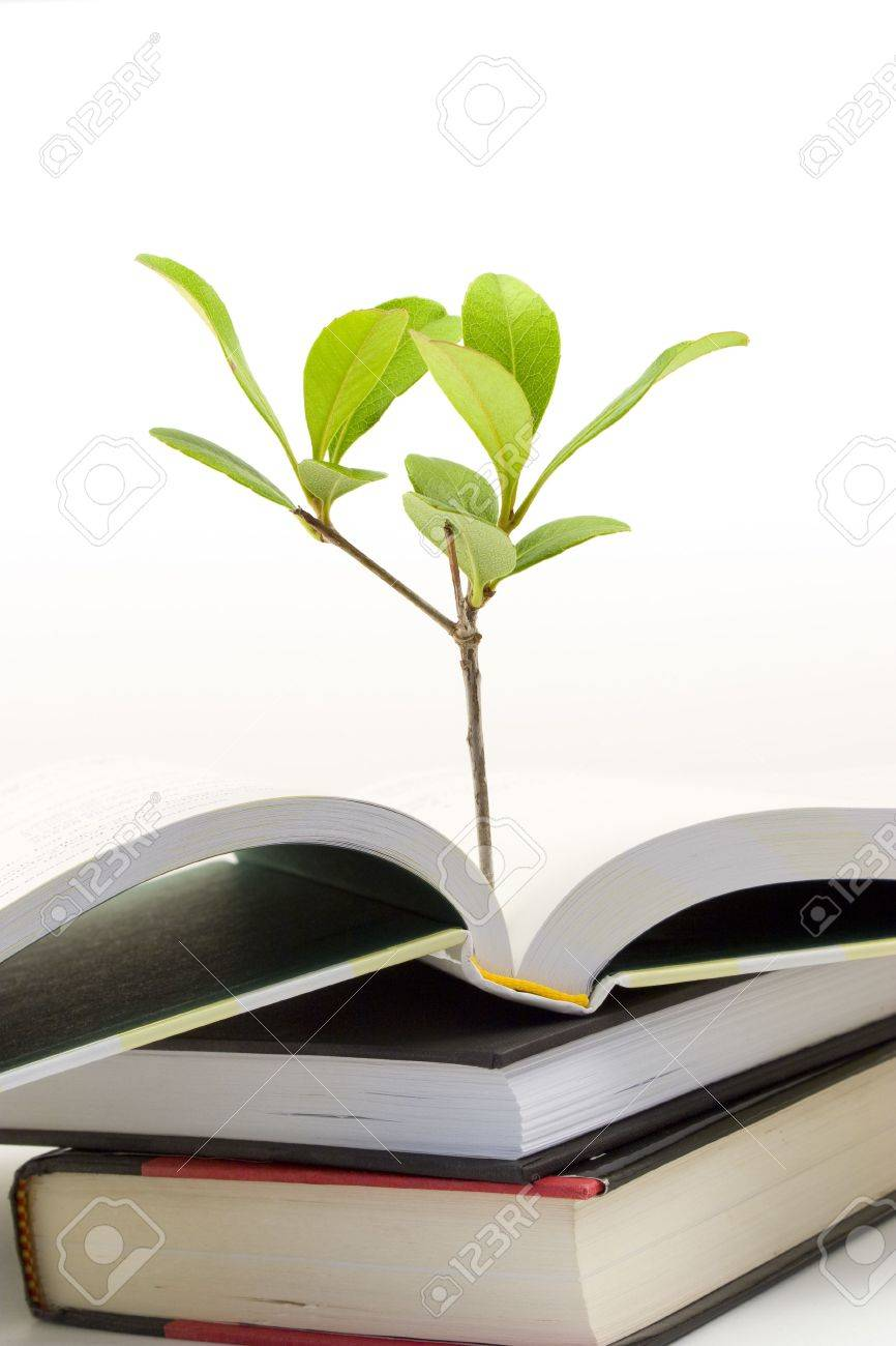 1d9174fdd7914 Stock Photo - Vertical image of small plant growing out of an open book