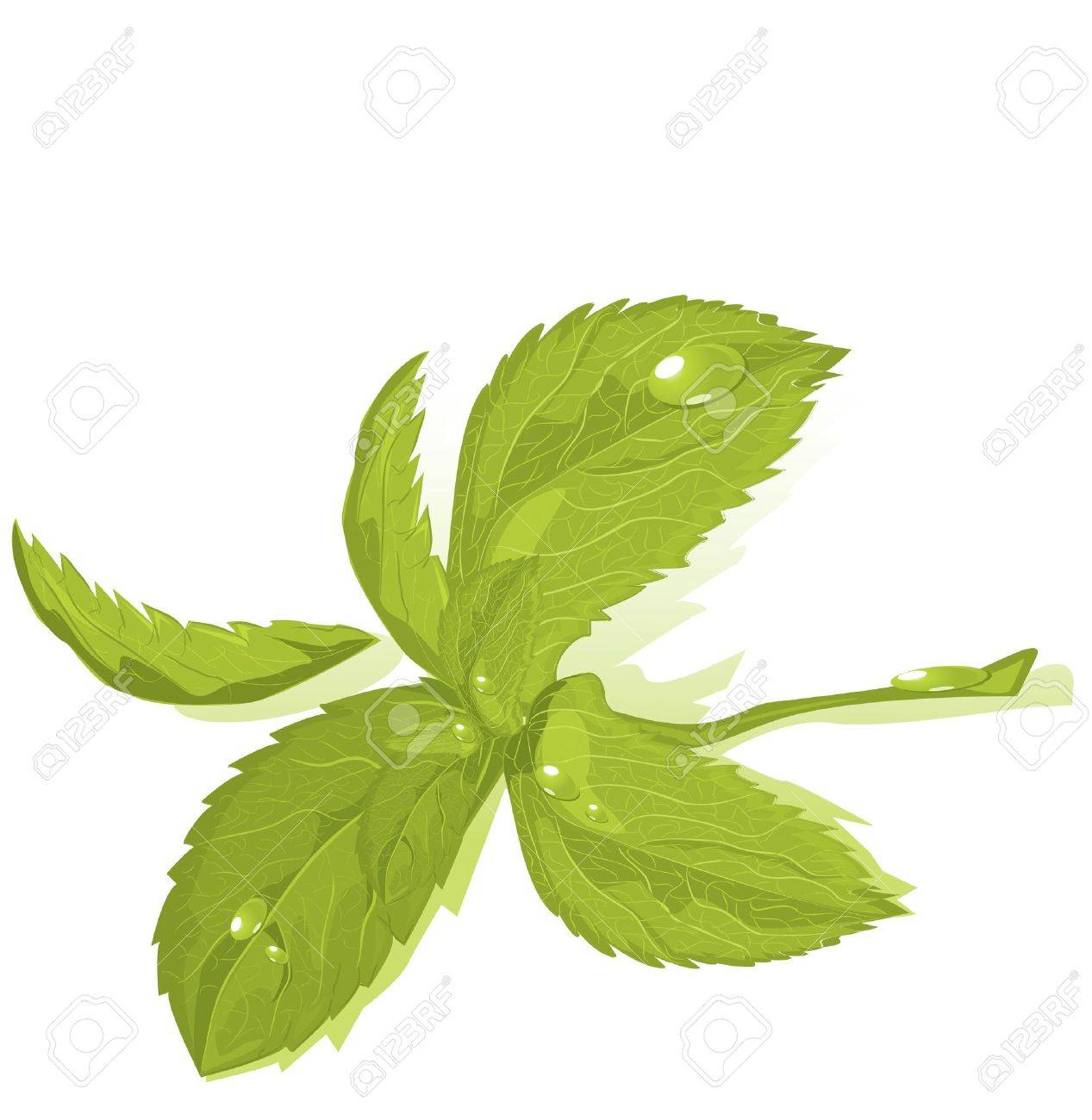 Fresh green mint leaves Stock Vector - 9370978