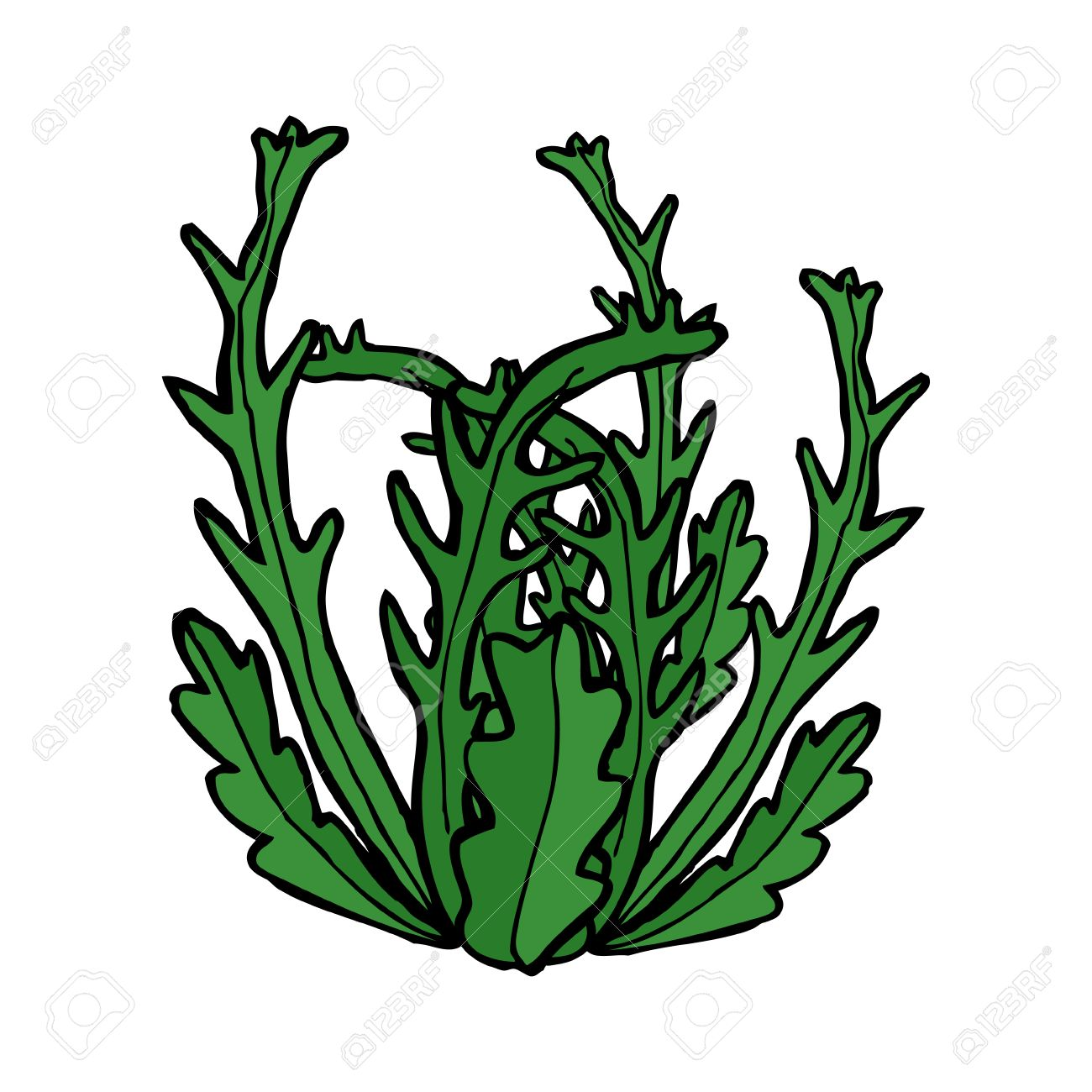 Image result for seaweed