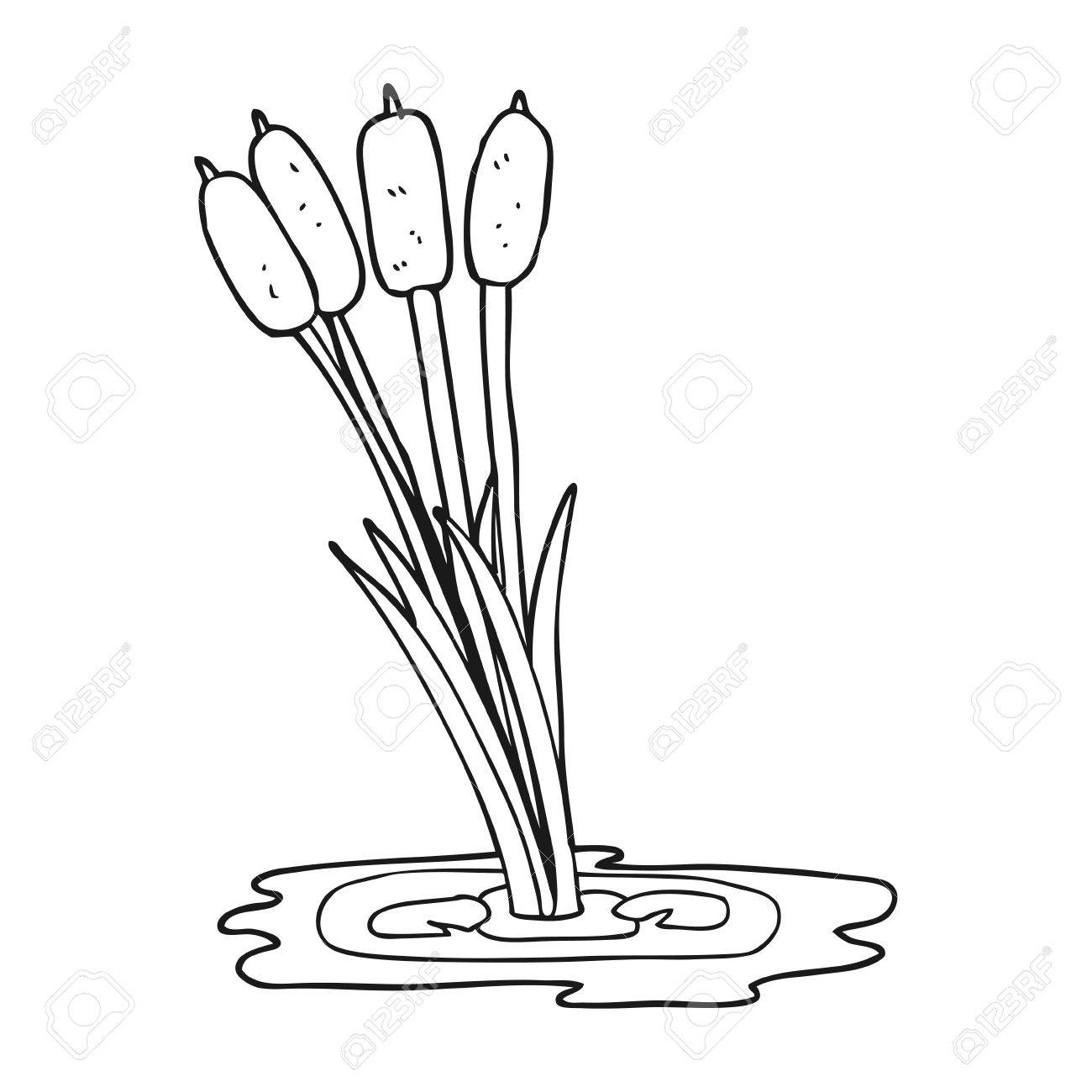 freehand drawn black and white cartoon reeds royalty free cliparts