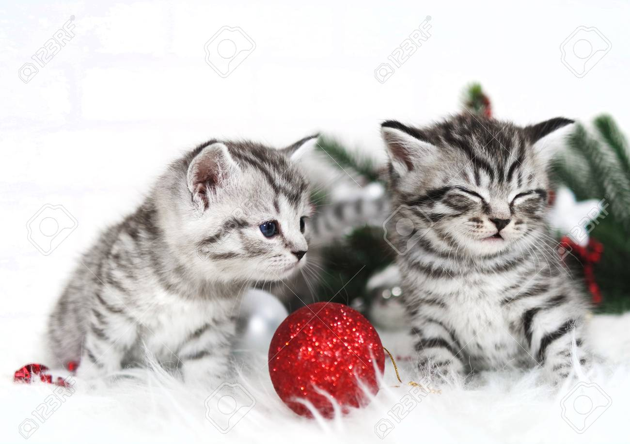 Kitten Christmas.Funny Kittens Curious Kitten Christmas And New Year Poster