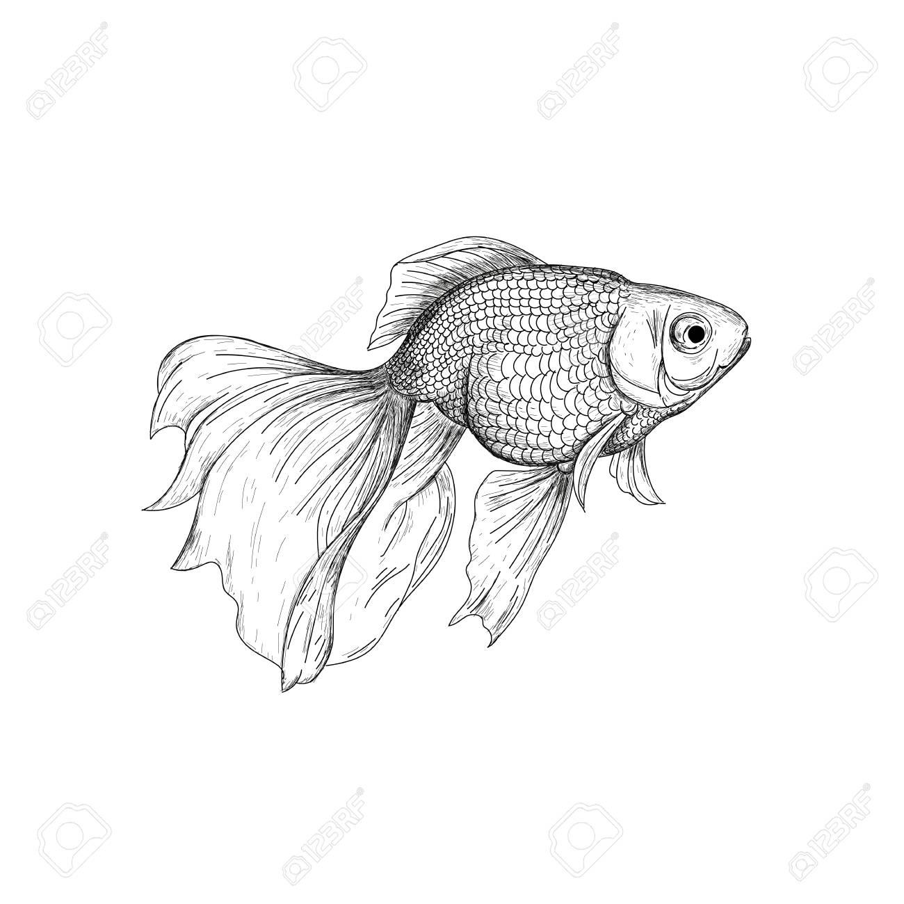 Goldfish illustration drawing engraving ink line art vector fish sketch