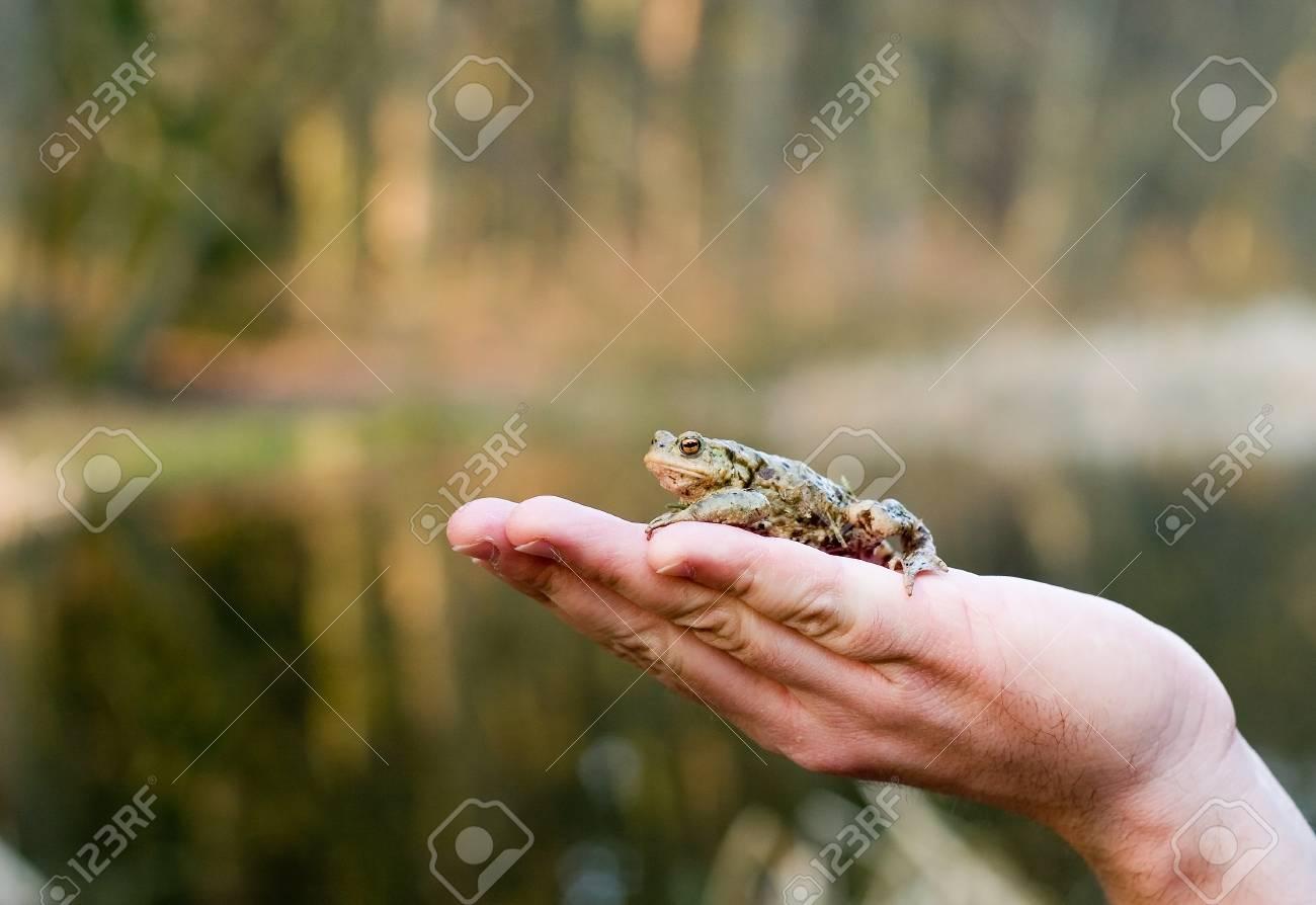 Kiss me (frog on a human palm) Stock Photo - 1665331