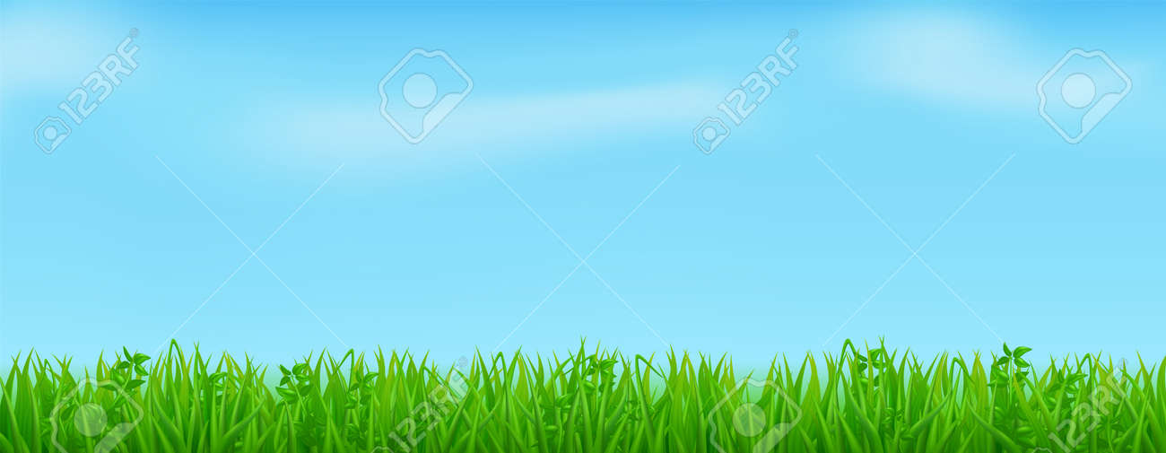 Green grass on spring lawn or field - 157356411