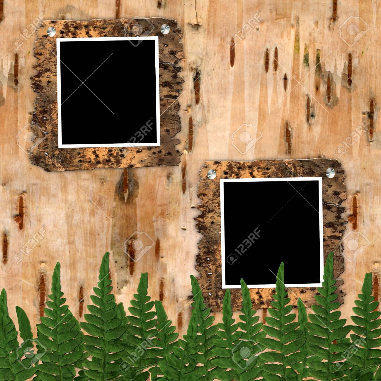Two frame to birchen bark with fern's leaves Stock Photo - 3960499
