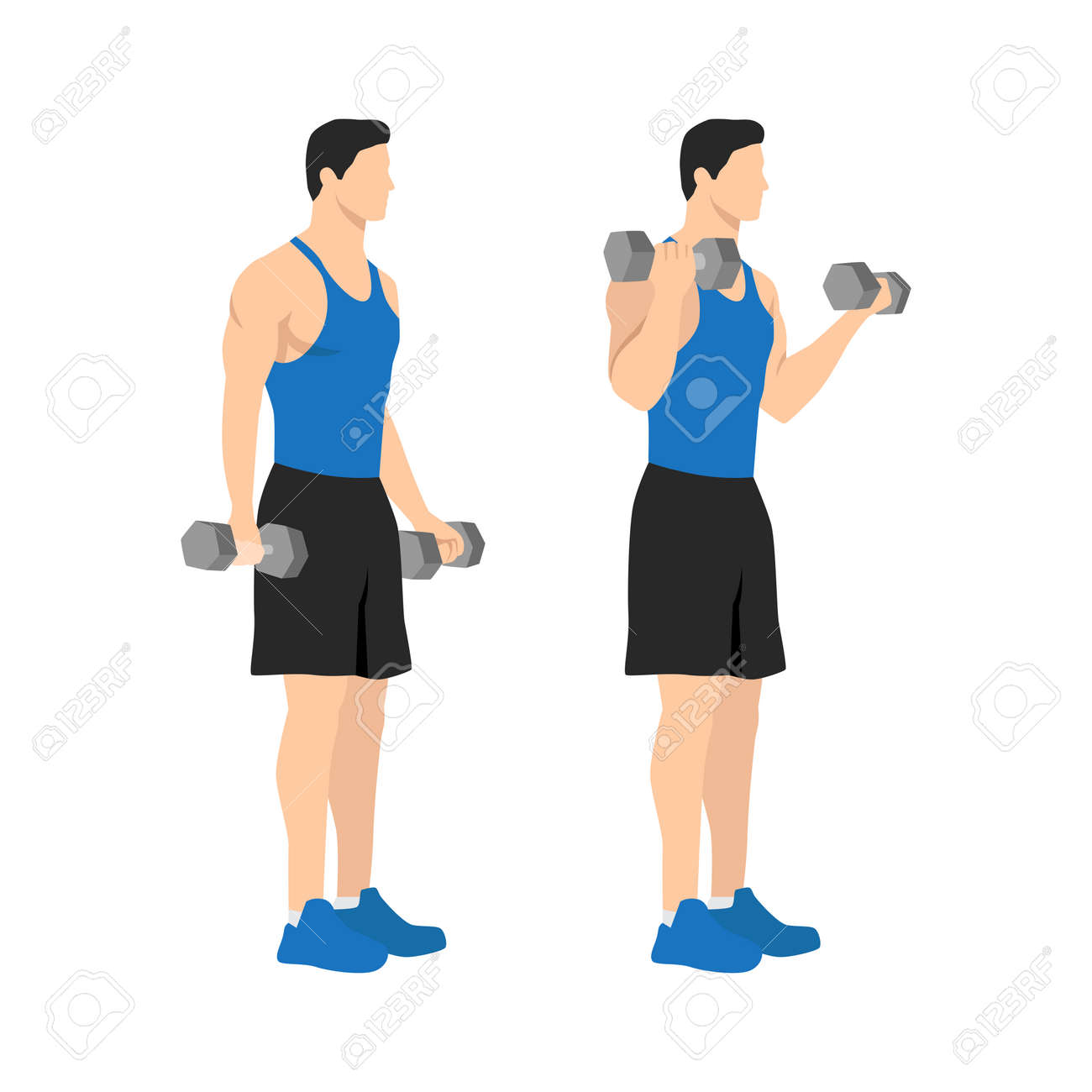Man doing standing dumbbell bicep curls. Flat vector illustration isolated on different layers. Workout character - 158681566