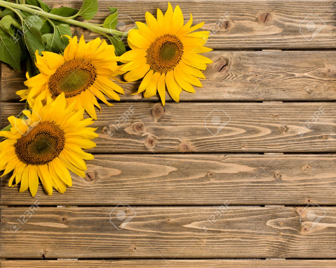 Three Sunflowers Are On The Wooden Background These Flowers Stock
