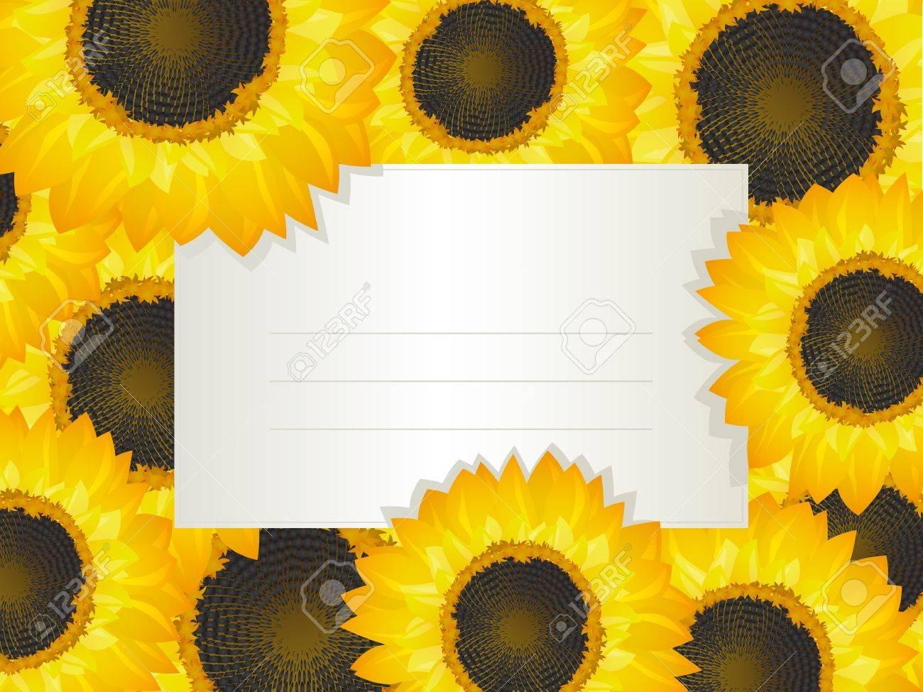 Illustration Eines Leeren Einladungskarte über Eine Sonnenblume Bett  Lizenzfreie Bilder 14041117