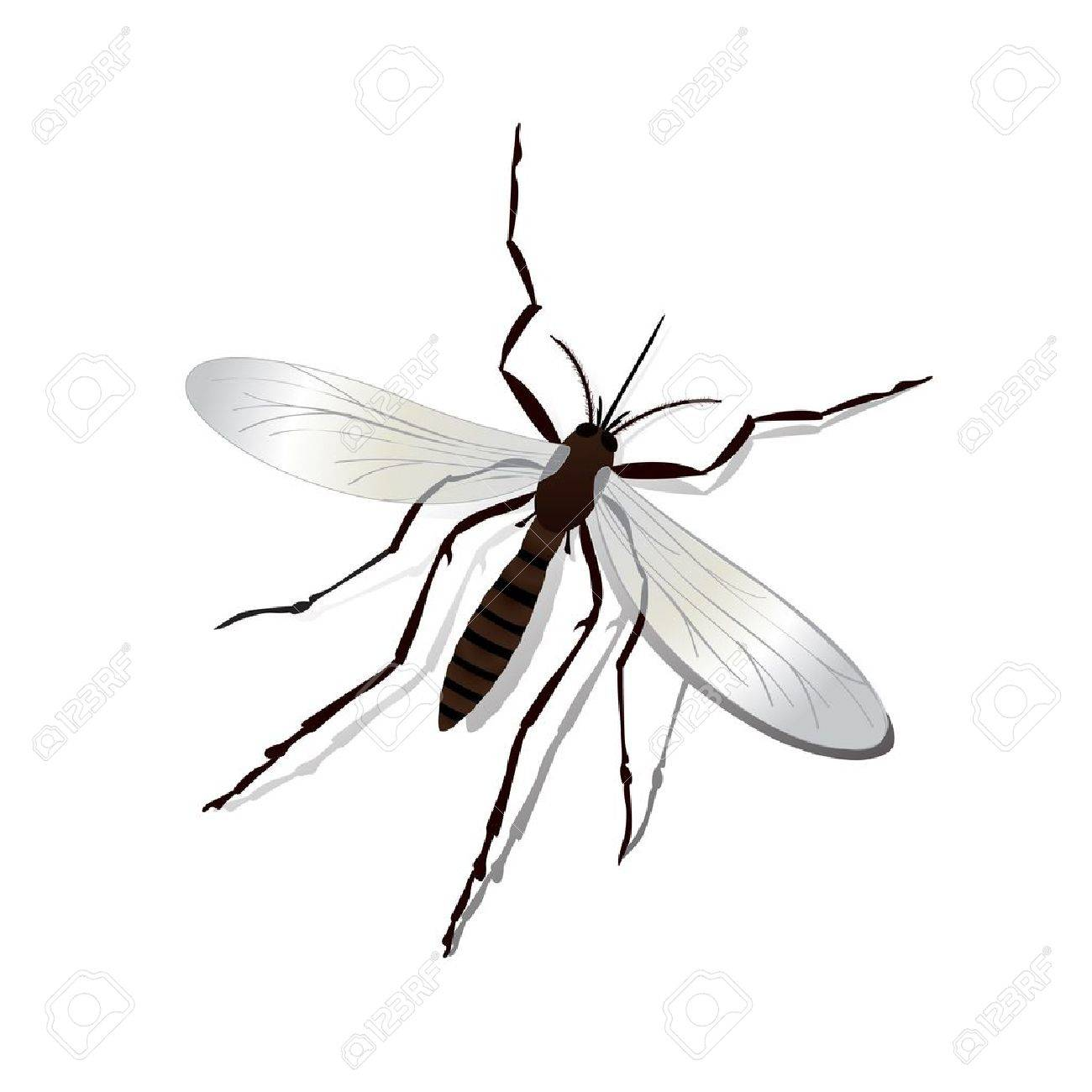 Realistic mosquito and shadow illustration, isolated and grouped objects over white Stock Vector - 15472535