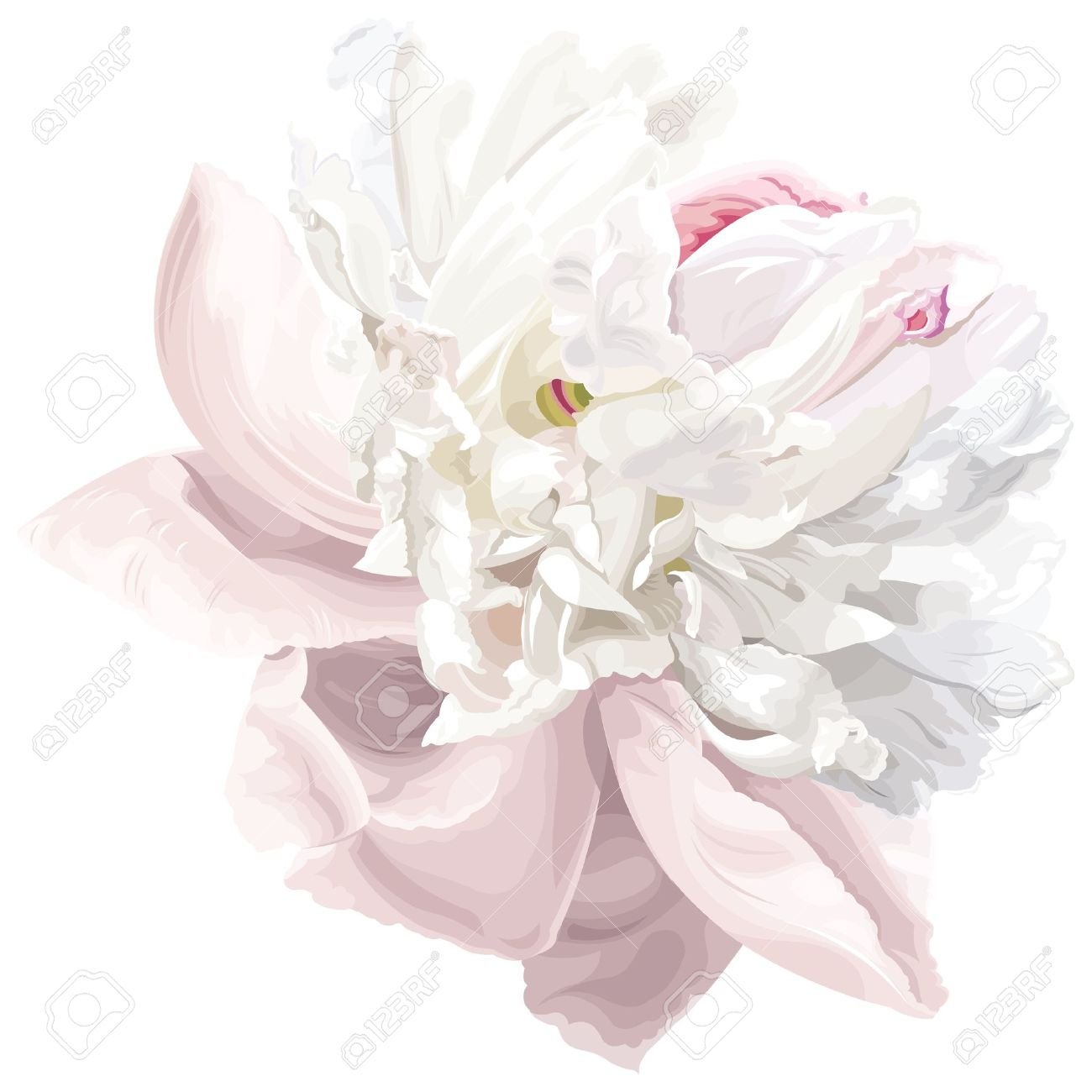 Luxurious white peony flower painted in pastel colors - 9931413
