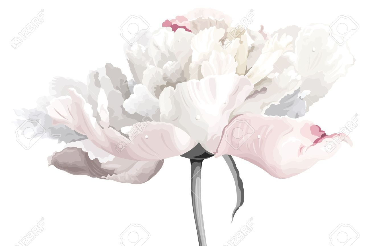 Luxurious White Peony Flower Painted In Pastel Colors Royalty Free