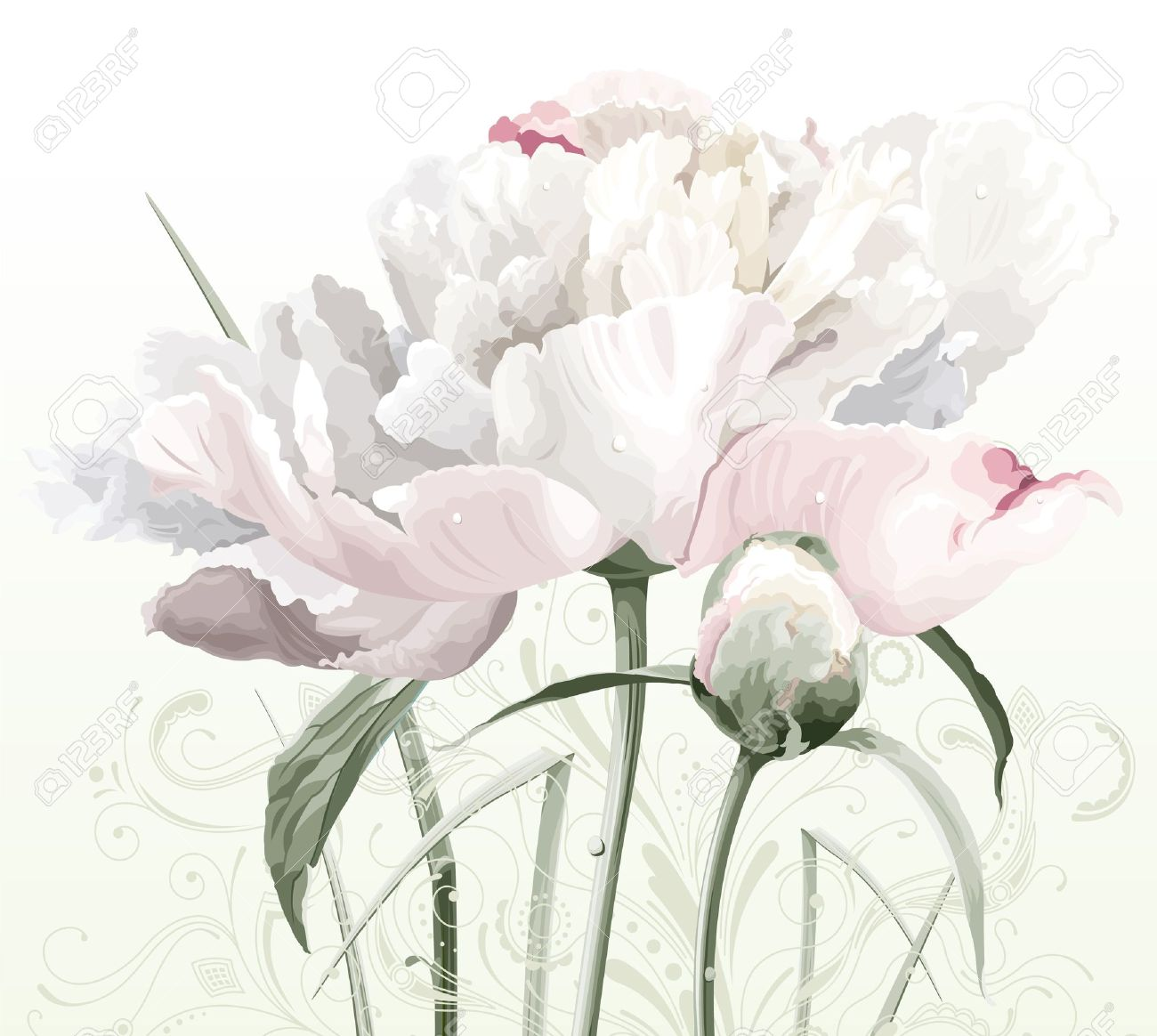 Luxurious white peony flower painted in pastel colors with bud and floral pattern Stock Vector - 10441796