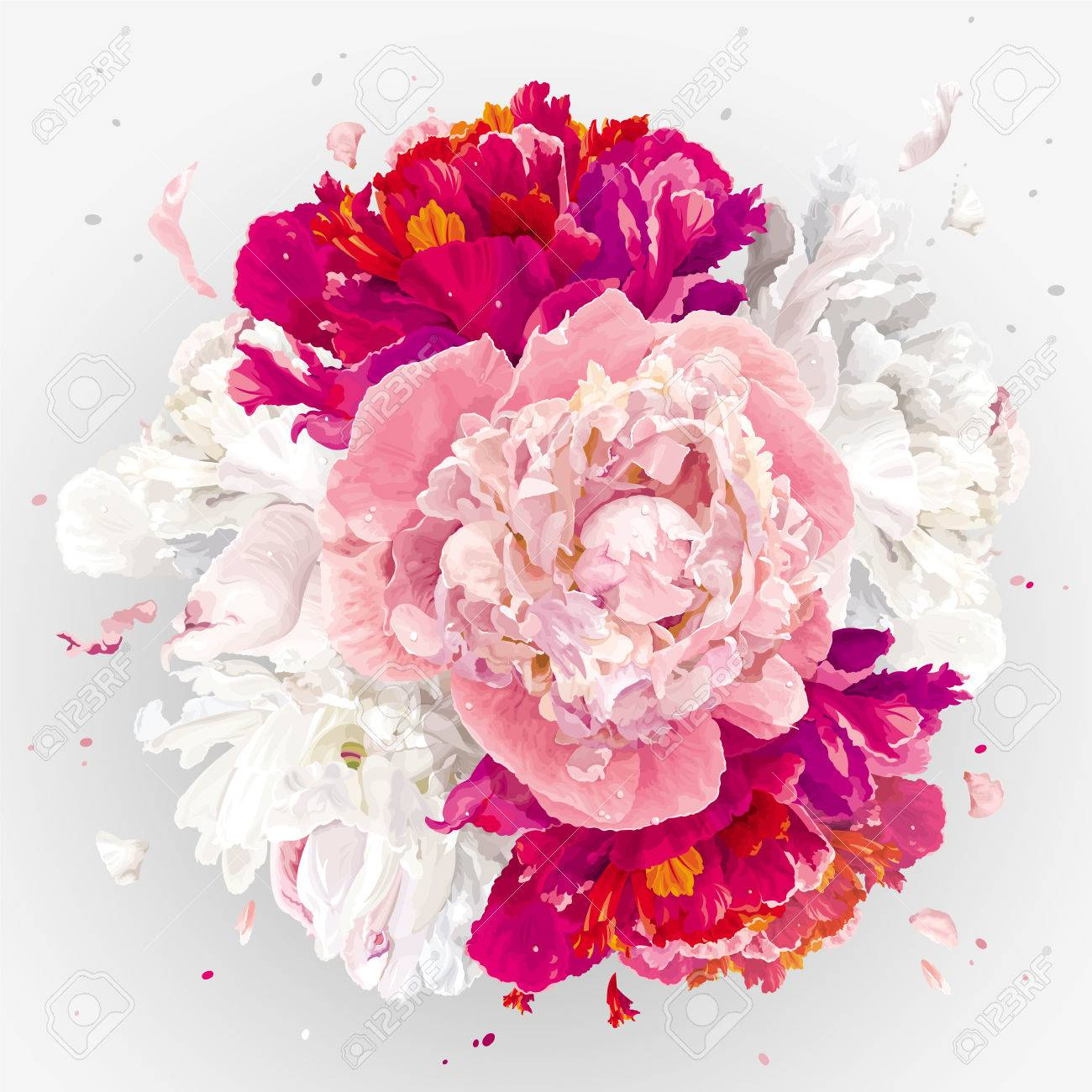 Luxurious Pink Red And White Peony Flower Spherical Composition Royalty Free Cliparts Vectors And Stock Illustration Image 69648442