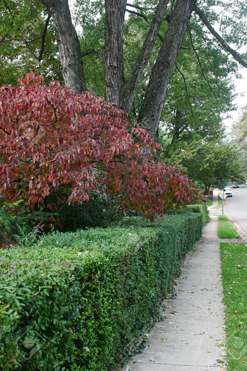A sidewalk in a shady suburban neighborhood, with fall colored foliage. Stock Photo - 204064