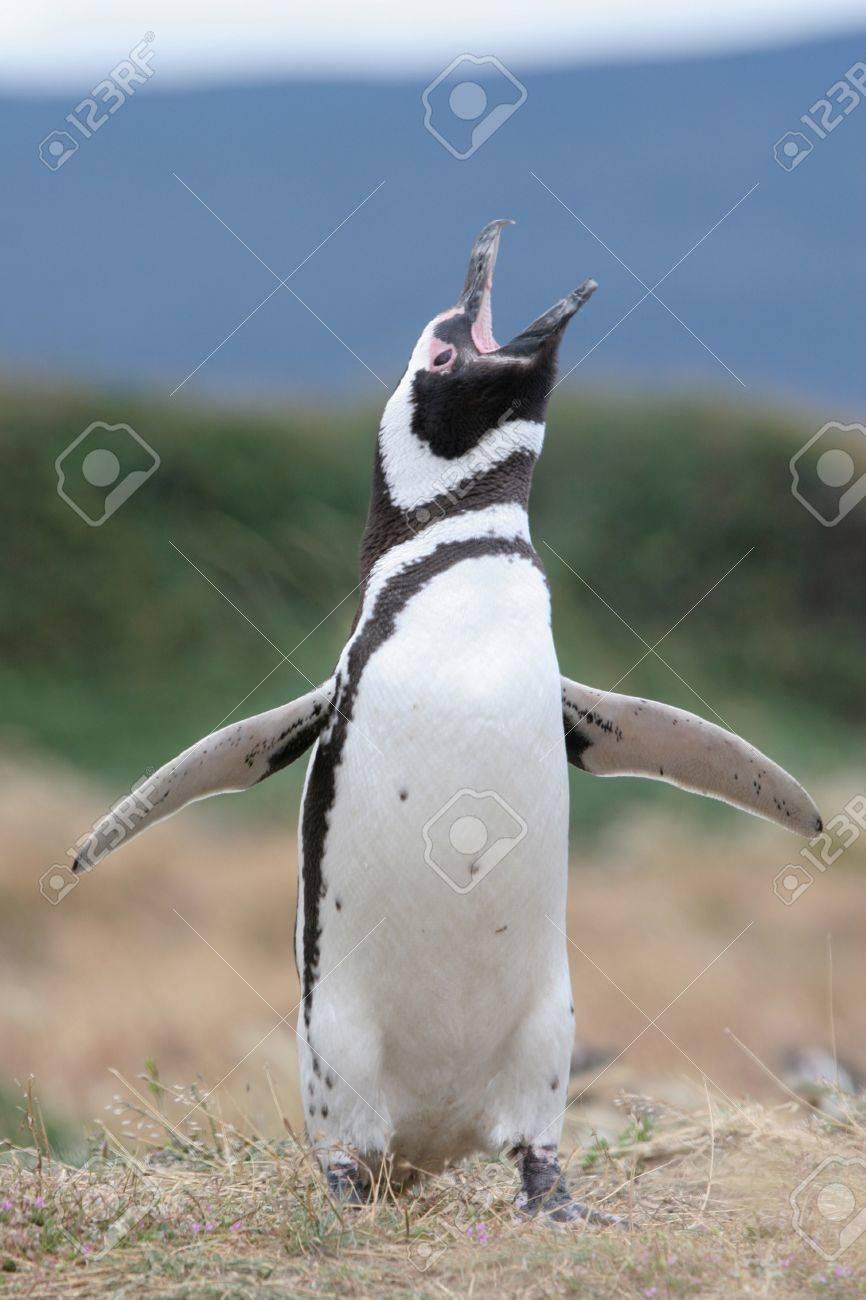 Pinguin geräusche