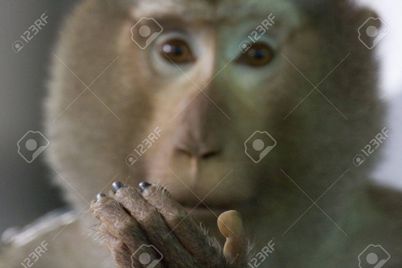 Elegant Haustier Affe Beste Wahl Hält Seine Hand Zeigt Seine Sehr Menschliche