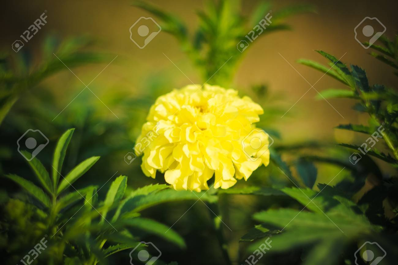 Beautiful Wild Yellow Flowers Stock Photo Picture And Royalty Free
