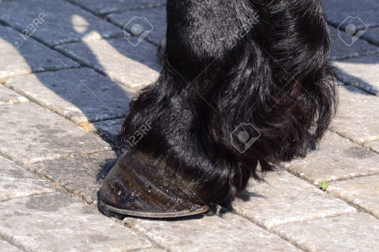 Black Horse Hooves Stock Photo Picture And Royalty Free Image Image 27886831