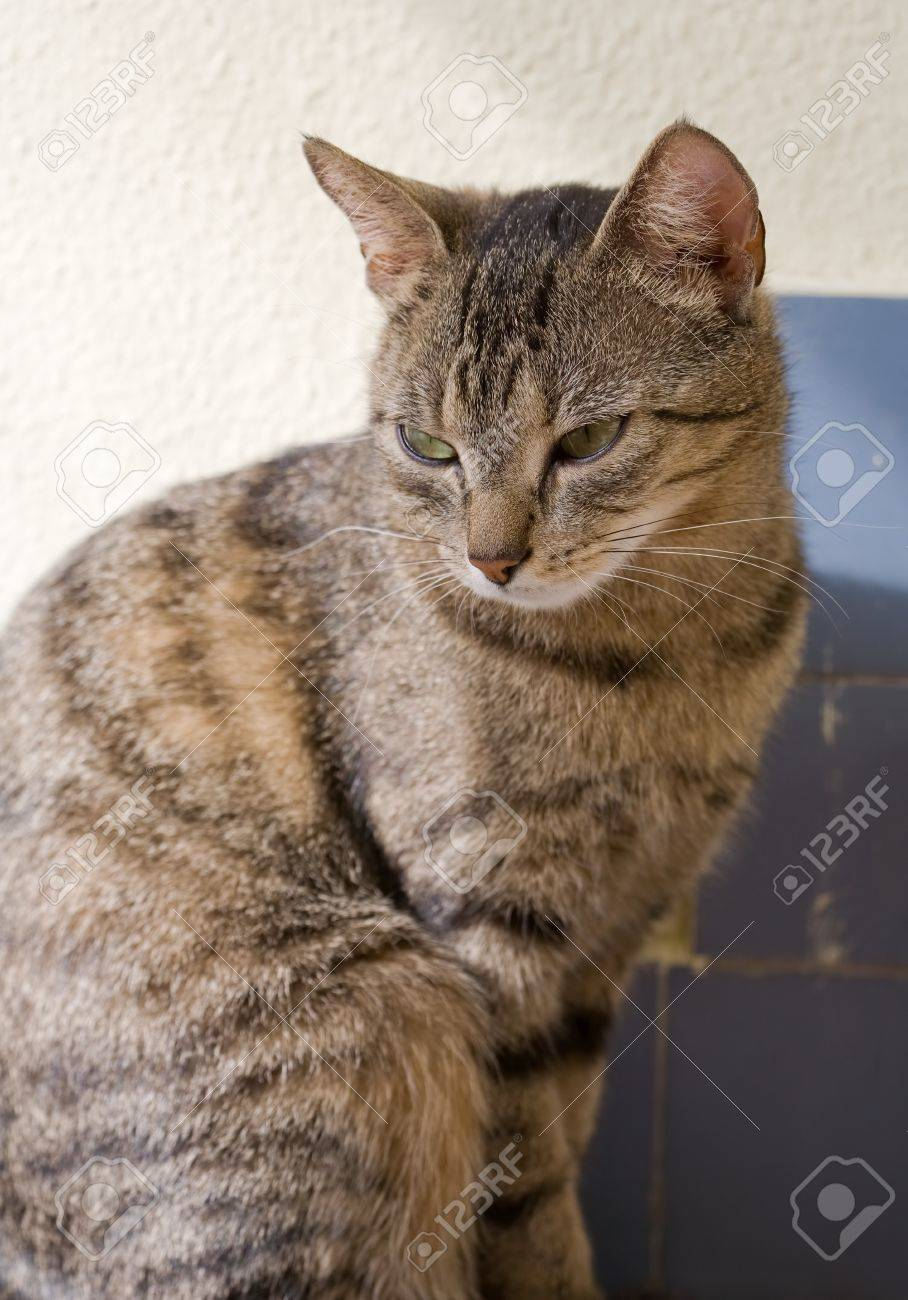 Portrait Of Cute Young Brown Mackerel Tabby Cat Relaxing Stock Photo Picture And Royalty Free Image Image 13053428