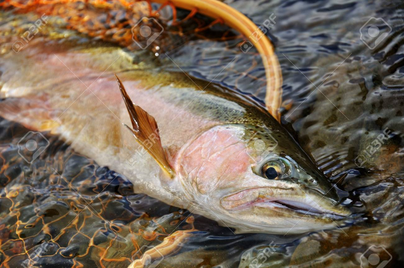 fly fishing stock photos u0026 pictures royalty free fly fishing
