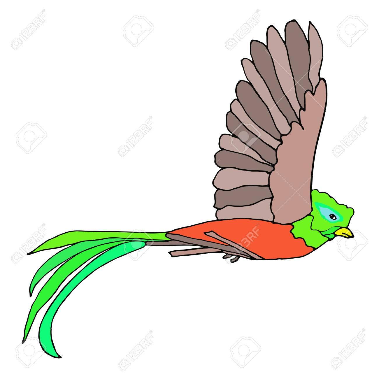 ケツァール鳥飛行。ケツァール。ベクトルの図。