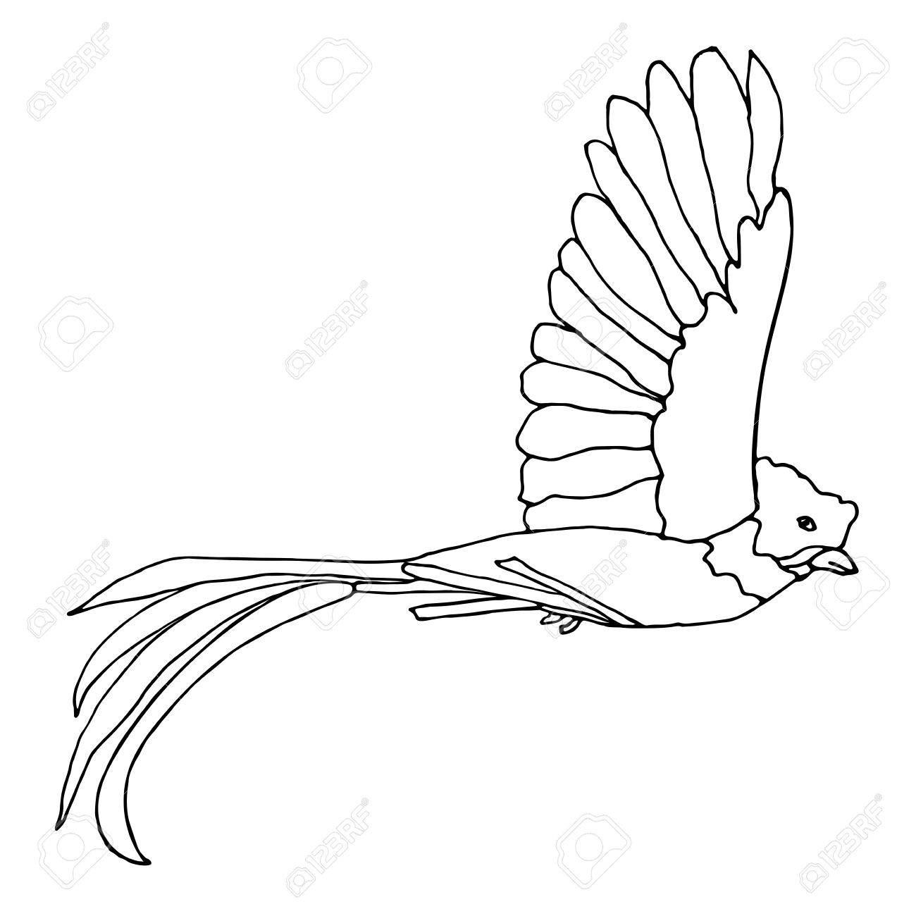 ケツァール鳥飛行。ベクトル ケツァール。手描きの白黒イラストです。