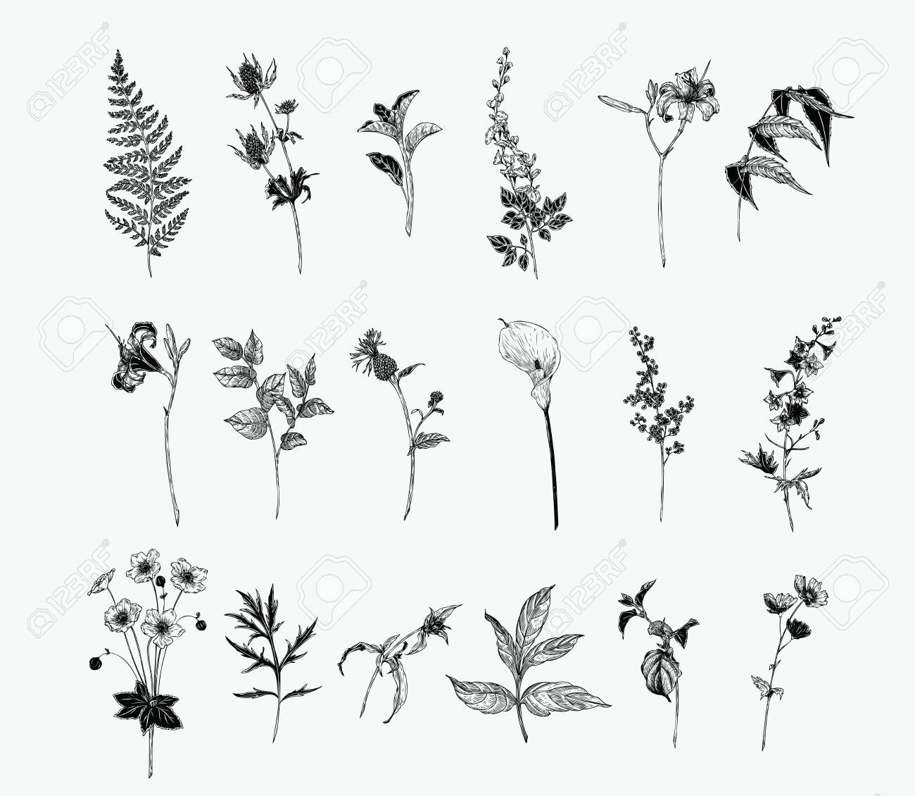Vintage wild flower illustration set. Isolated black and white botanical herbs and flowers hand drawn graphic. Fern, Lily, Calla, Anemone, Salal, Wisteria, Delphinium - 127095997